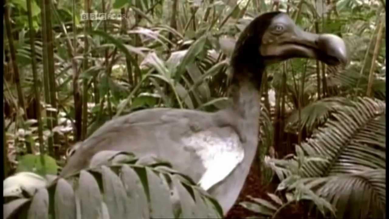 The Dodo Bird - An Educational Insight