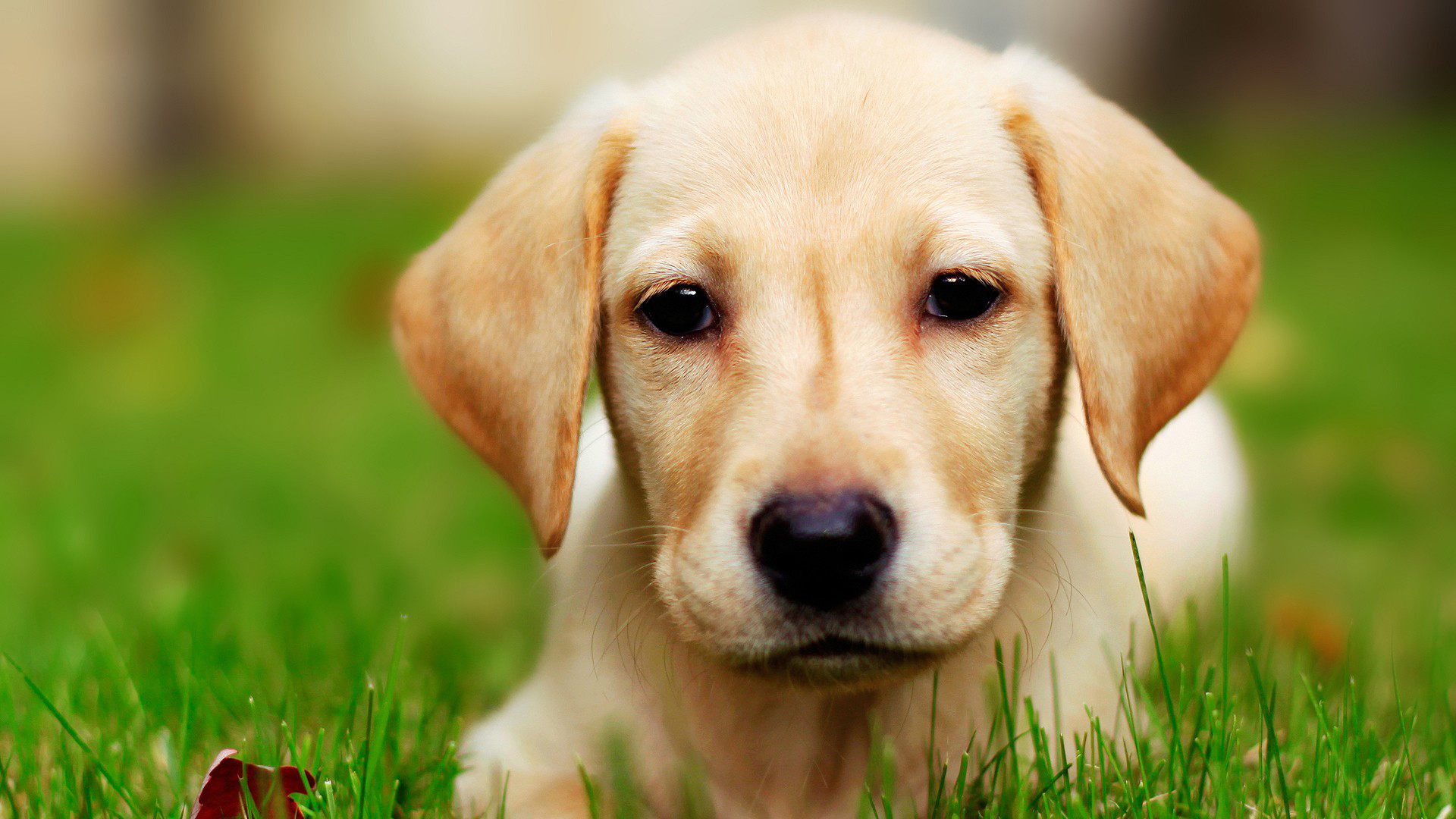 Dog- Photo#05