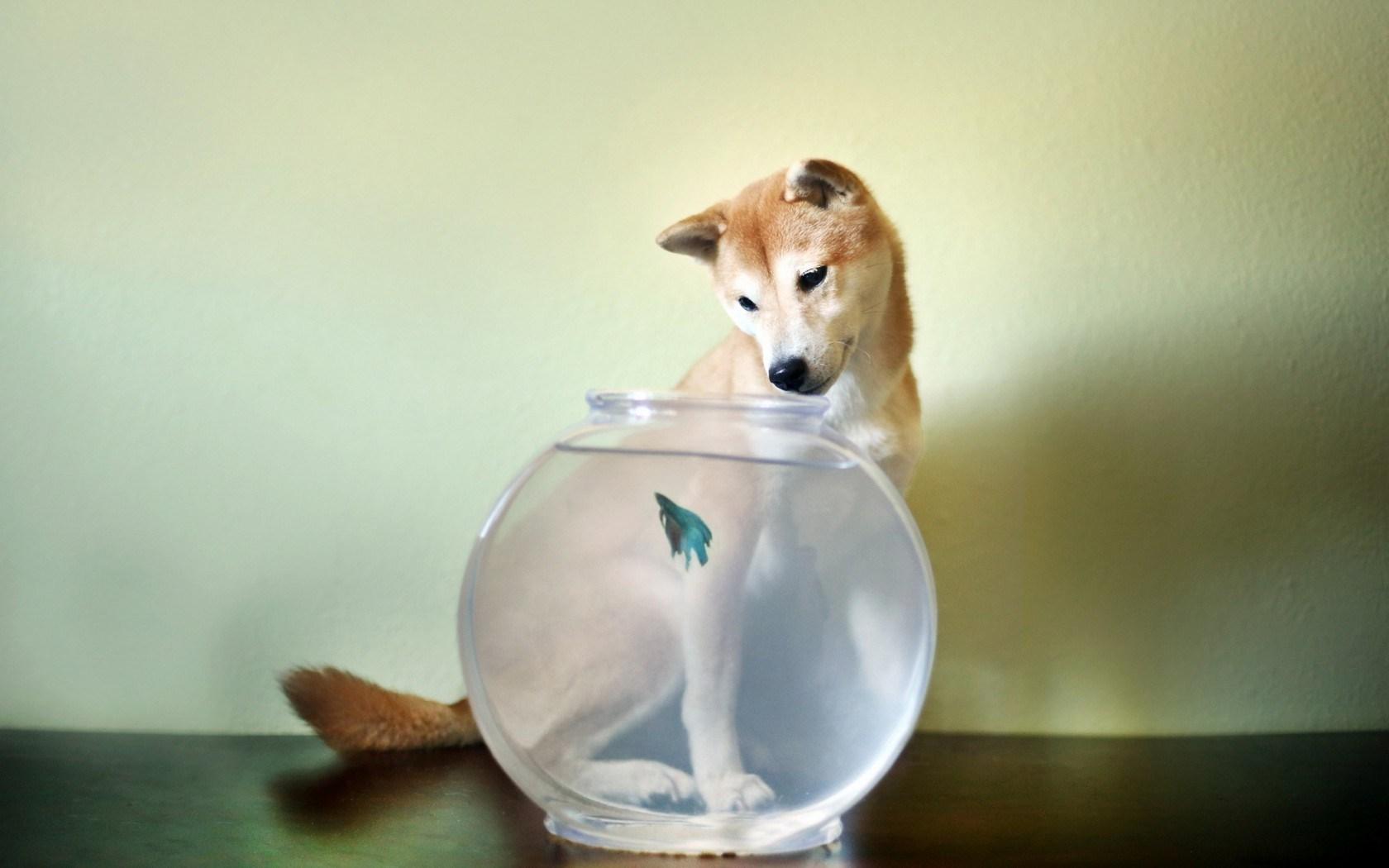 Dog Aquarium Fish