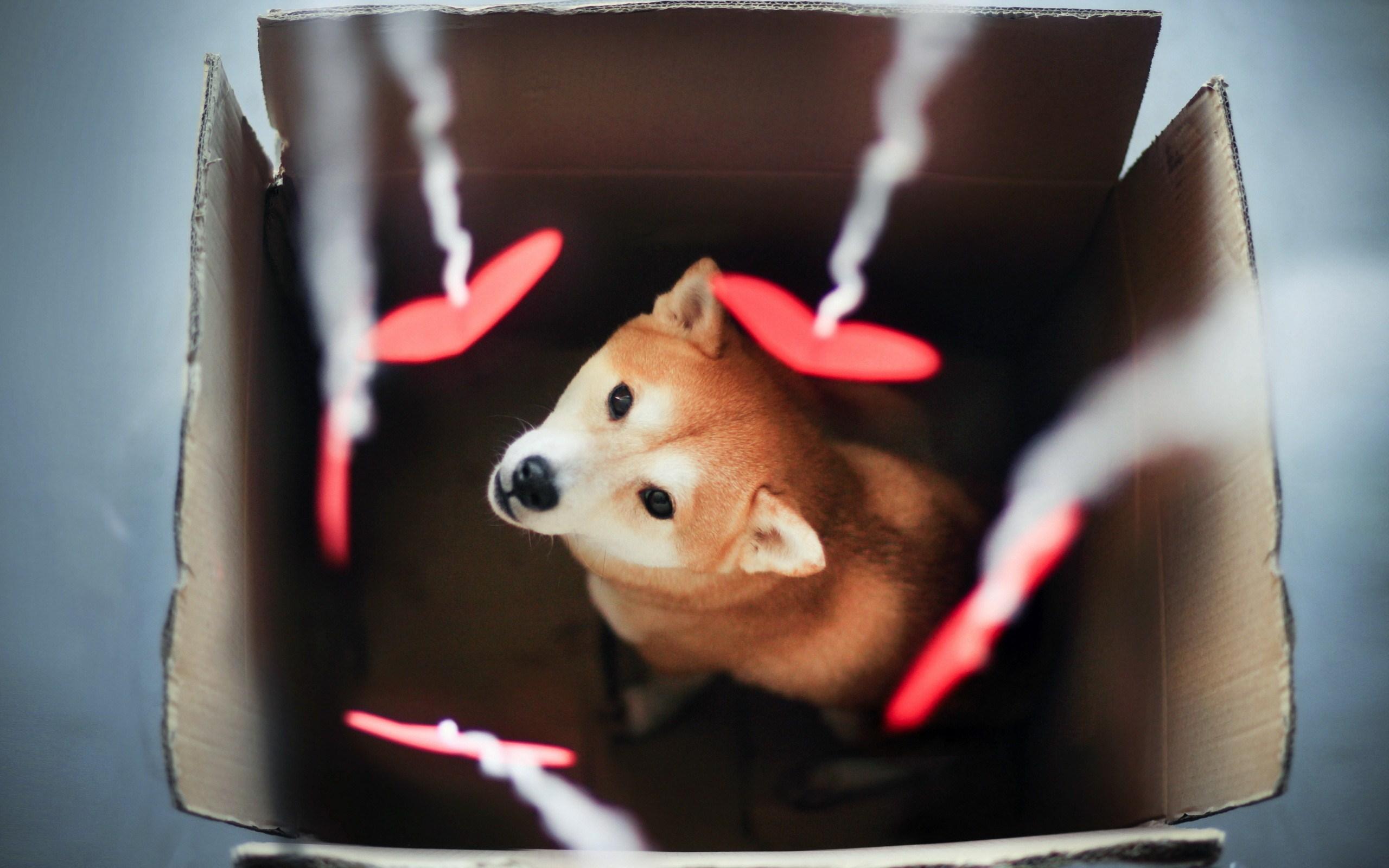 Dog Box Hearts Photo