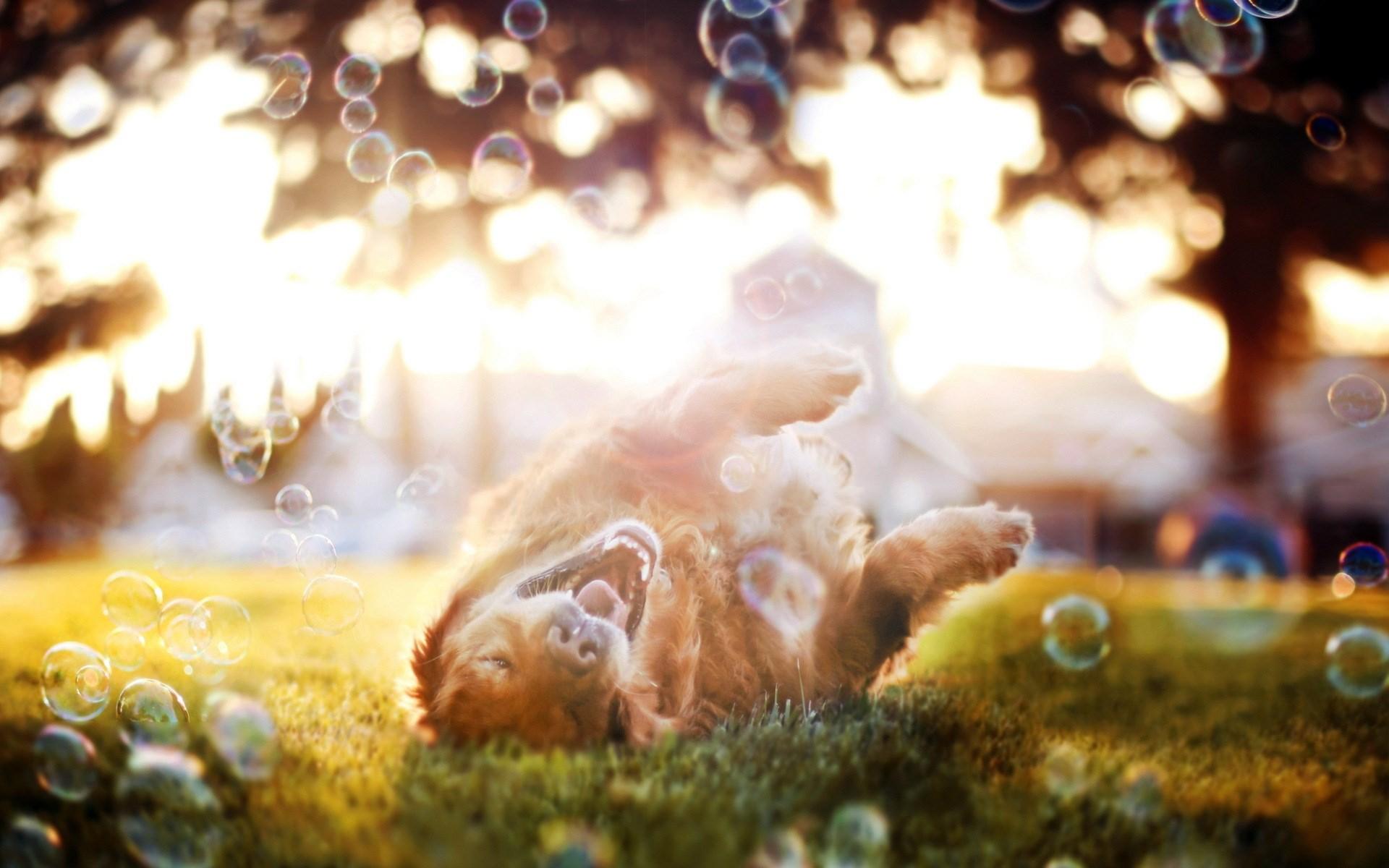 Dog Bubbles Summer