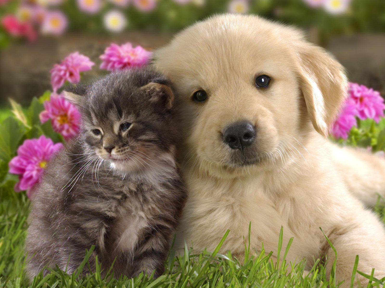 Cute Cat Dog Friendship HD Wallpaper