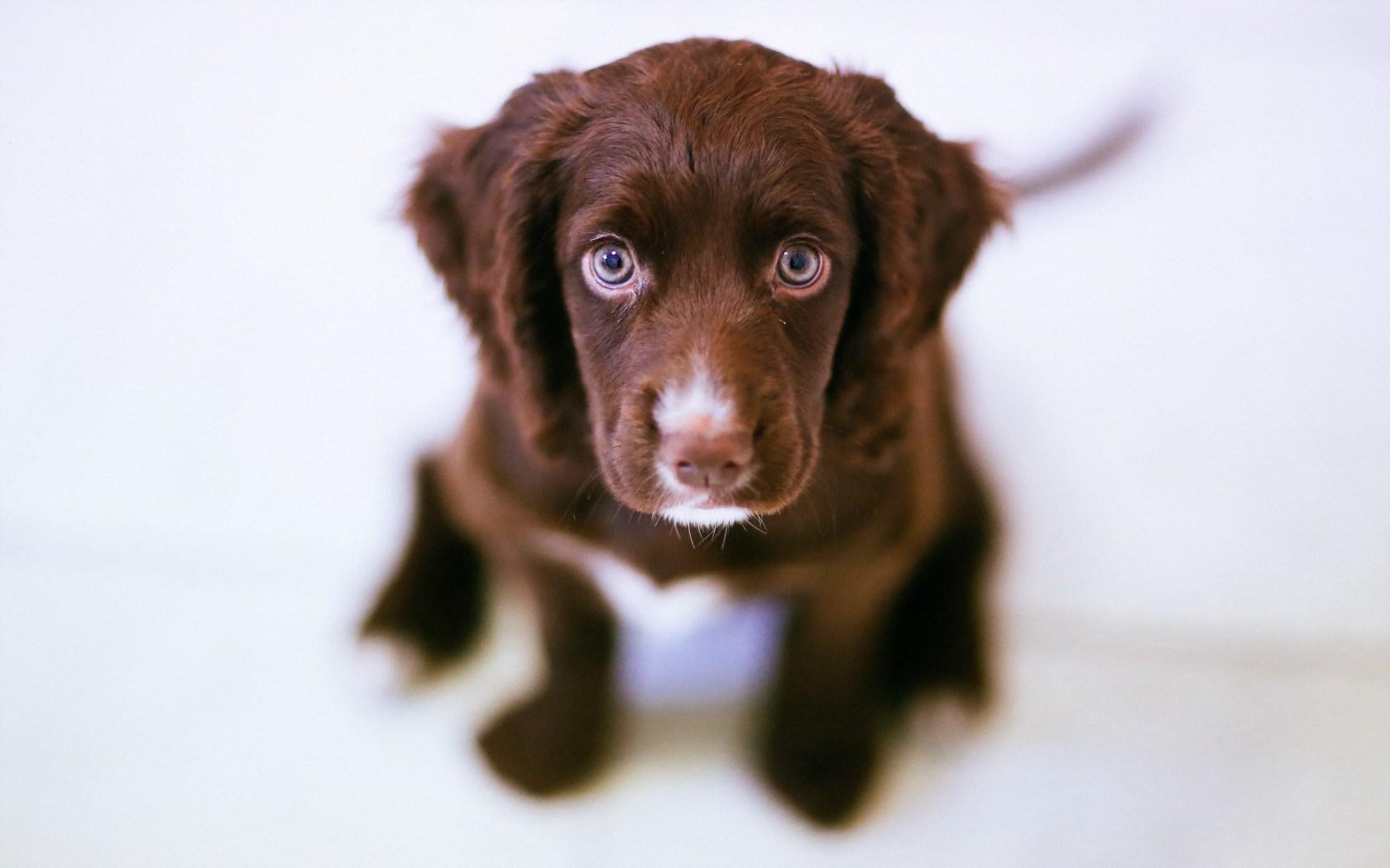 Cute Dog Eyes Friend