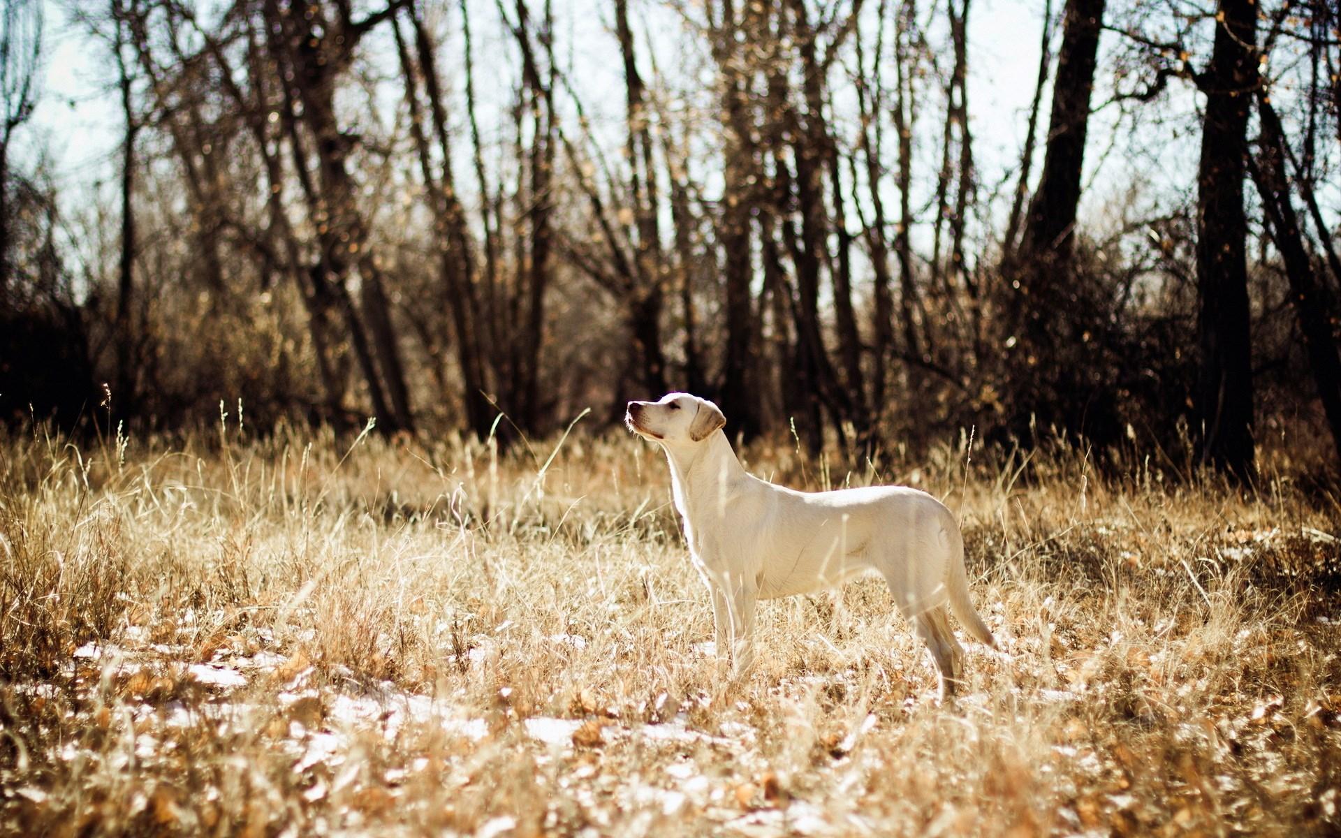 Dog Field Hunting