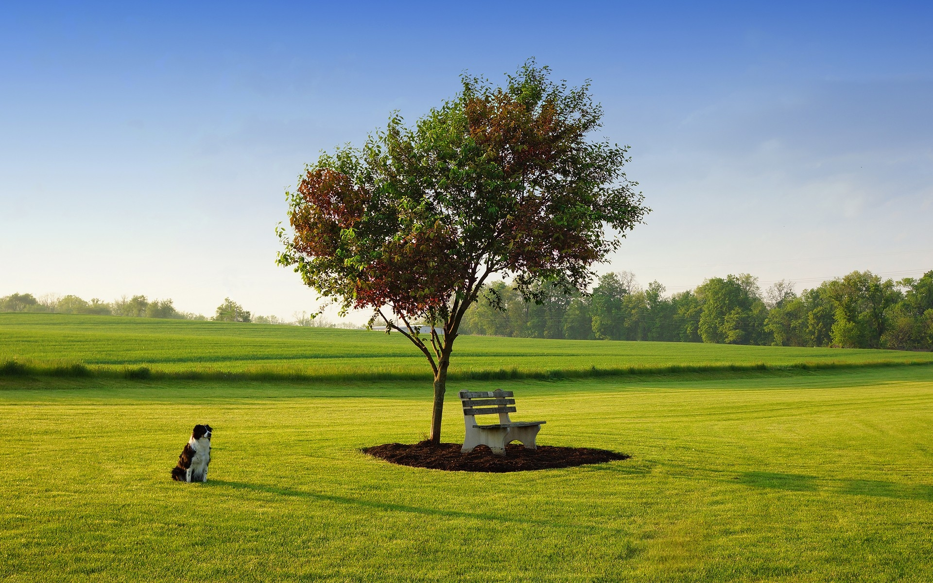 View: Trees Bench Earth Field Dog wallpapers and stock photos