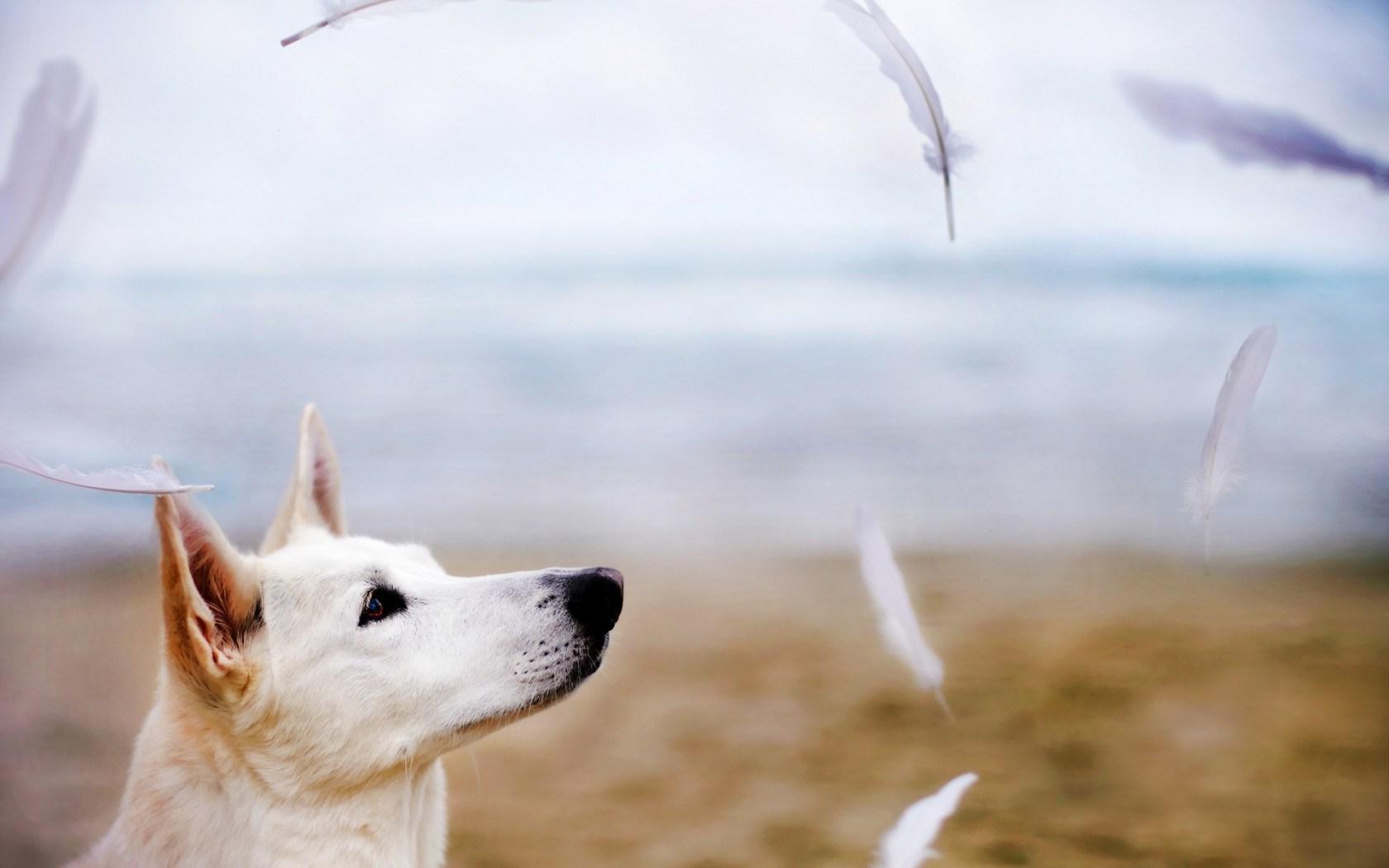 Dog Friend Feathers
