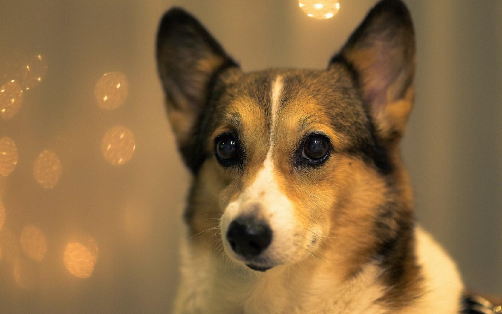 Dog Friend Look Close-Up