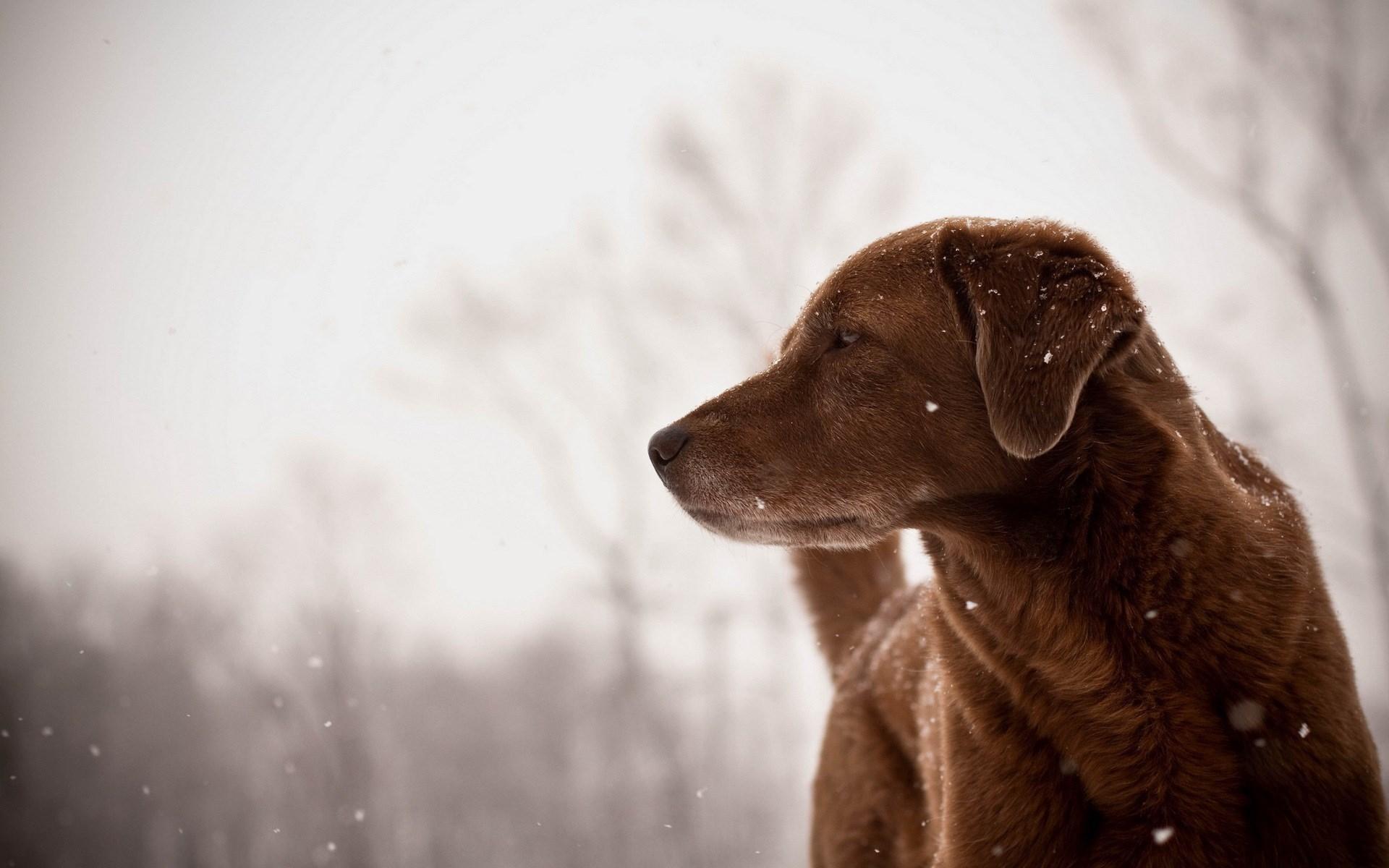 Dog Friend Look Winter Snowflakes
