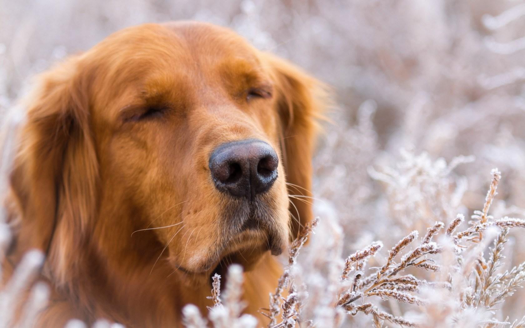 Dog Friend Nature Winter