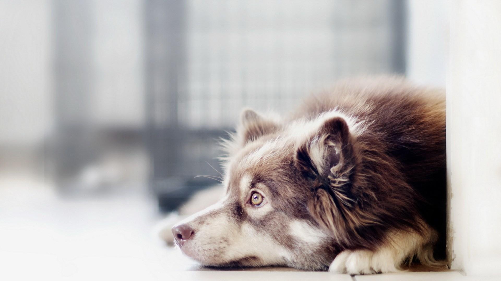Dog Friend Floor