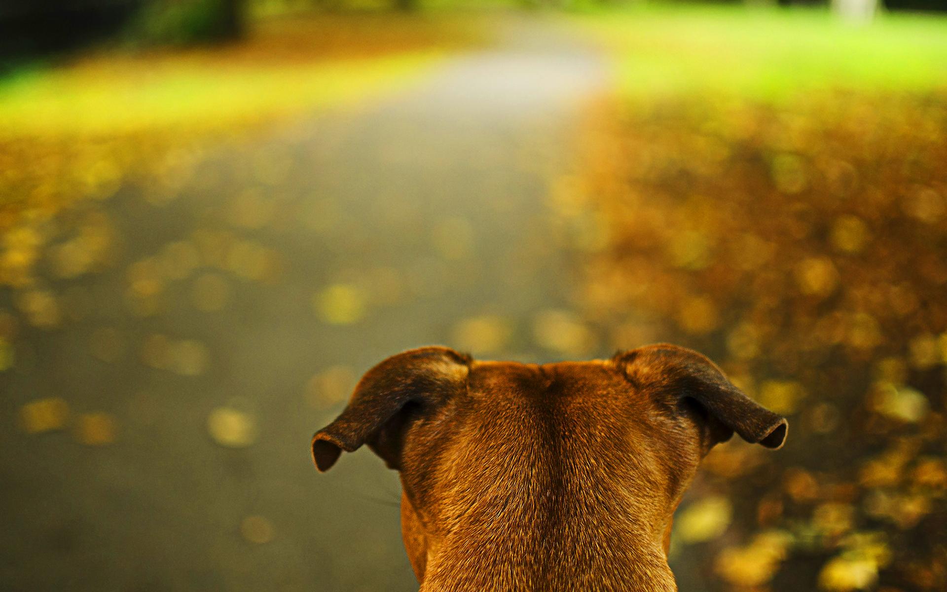 Dog head autumn