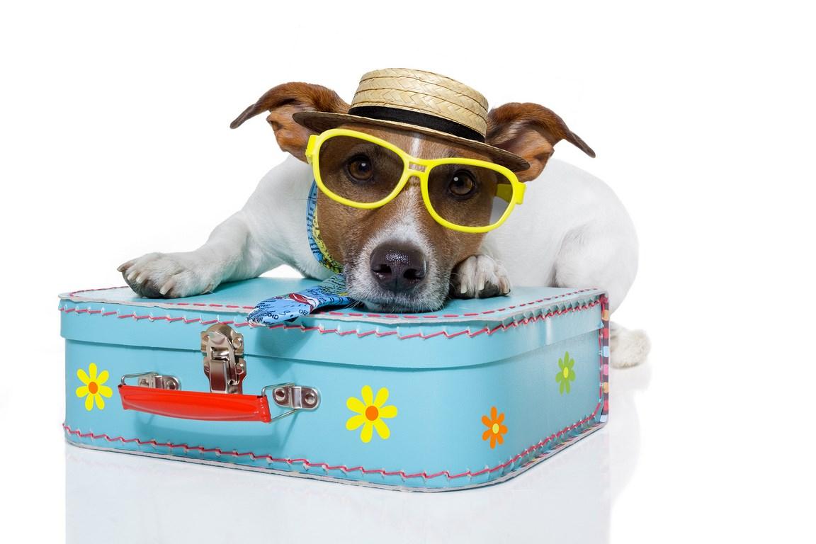 Dog-on-holiday