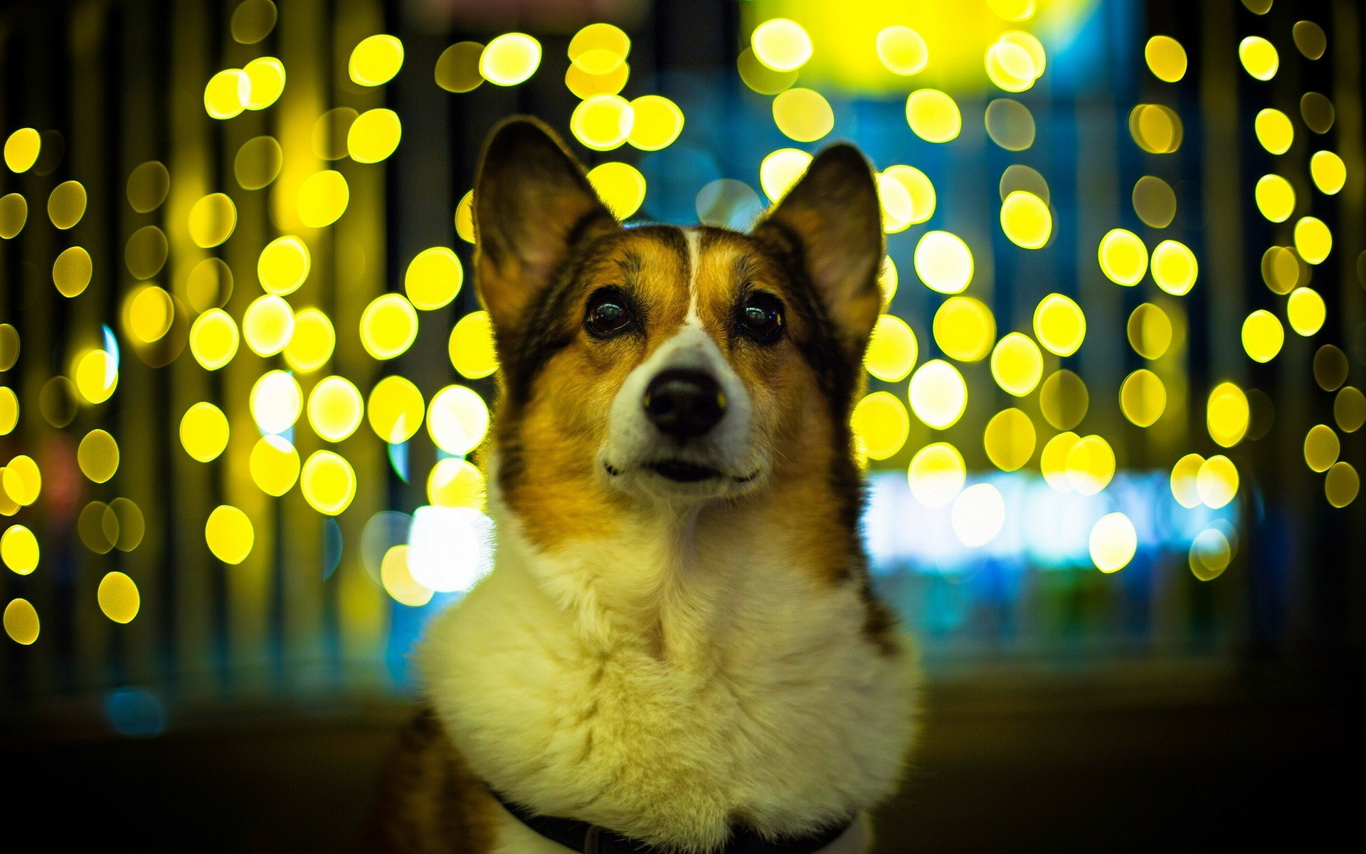 Dog Look Lights Amazing Photo