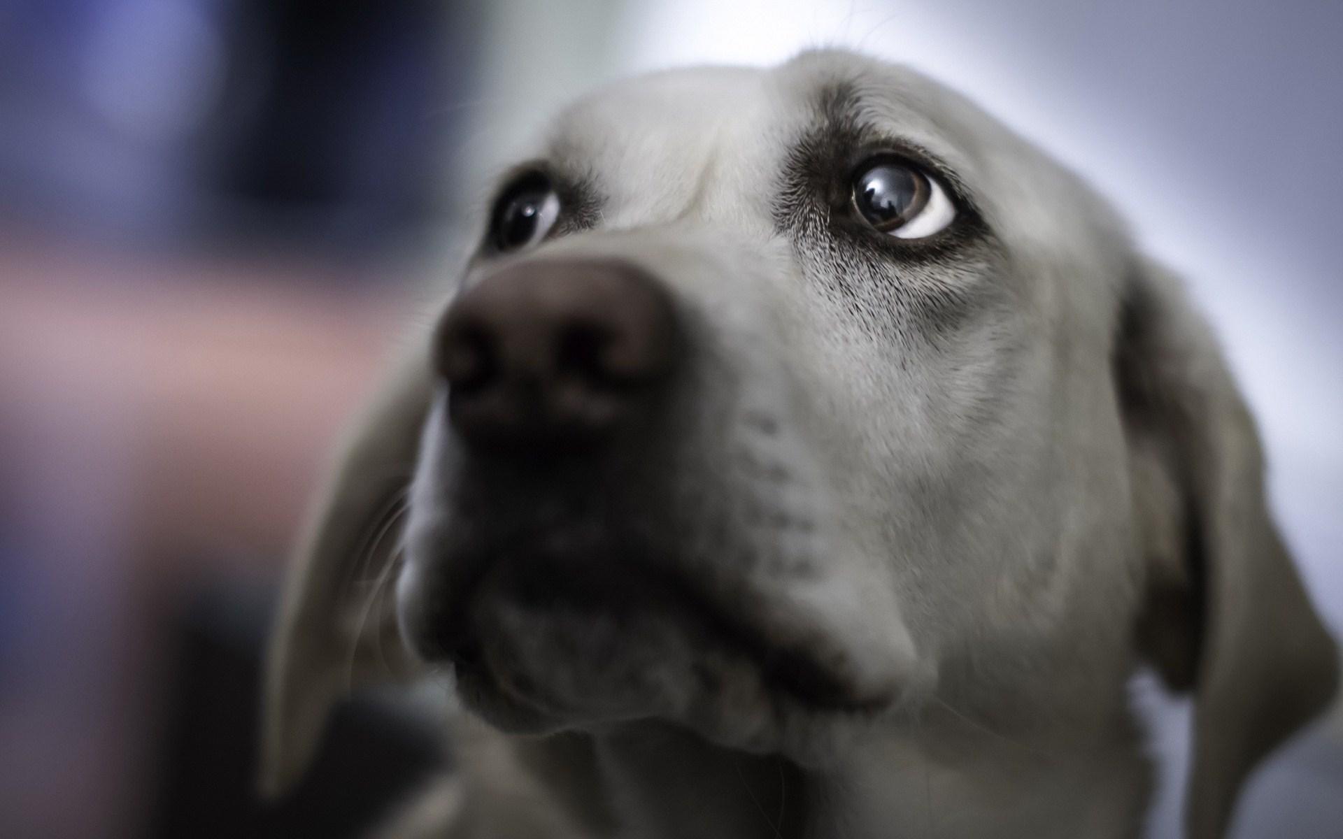 Dog Look Macro