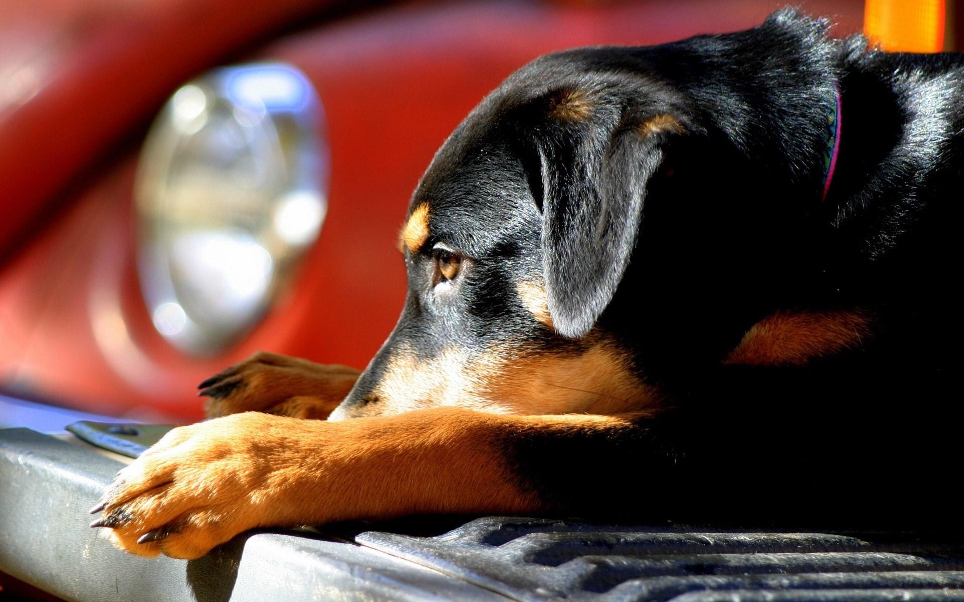 Dog Puppy Car Photo