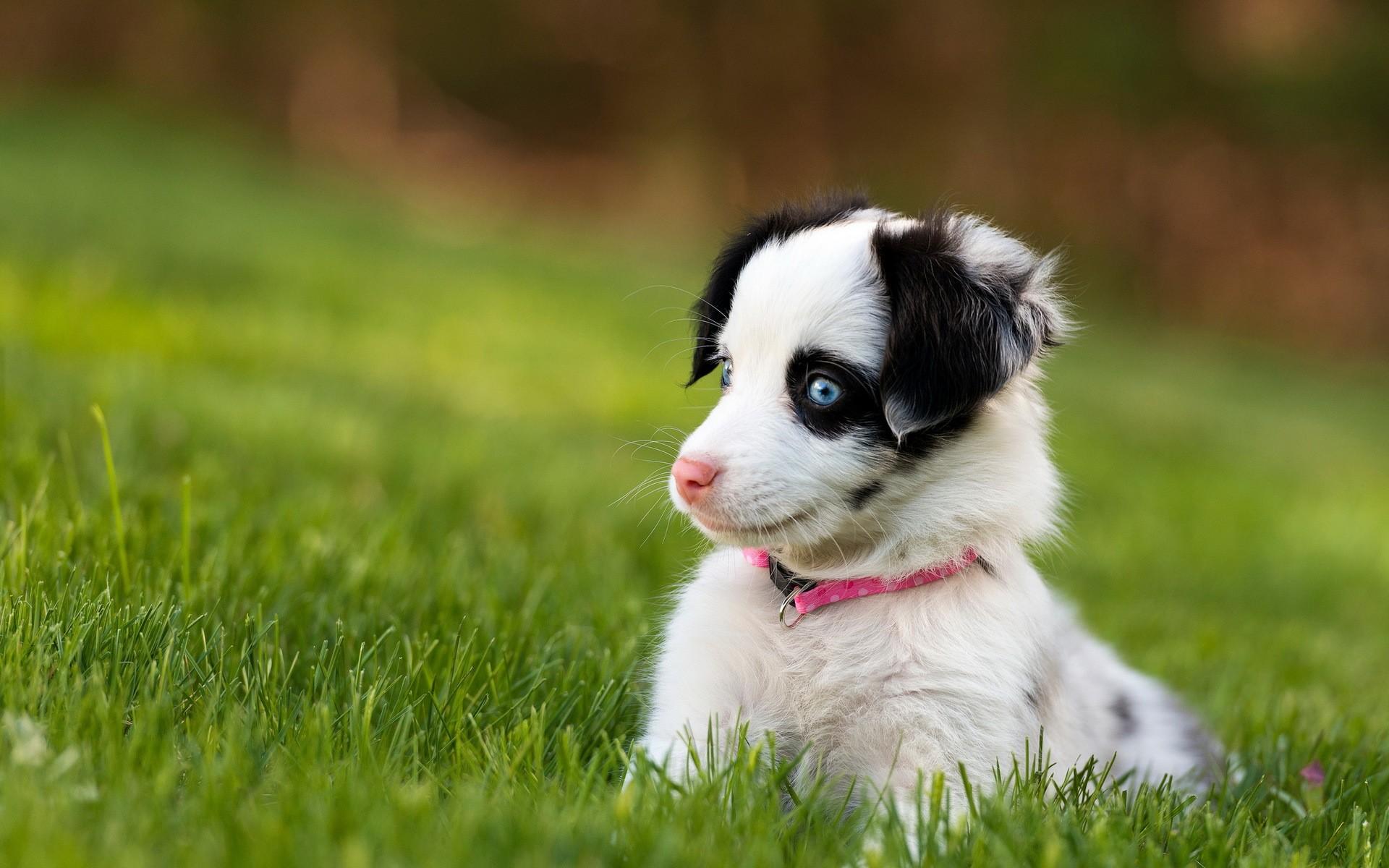 Dog Puppy Grass