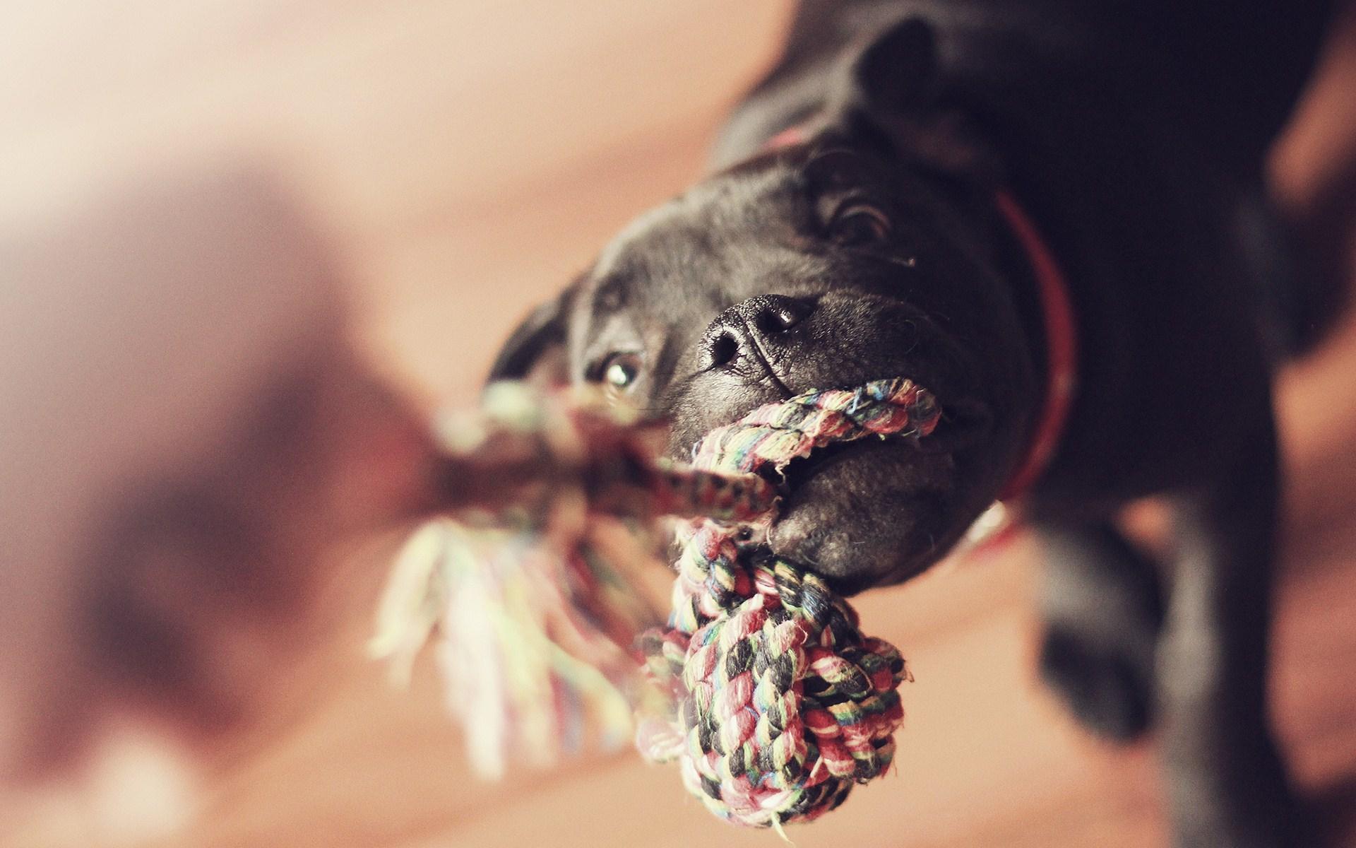 Dog Rope