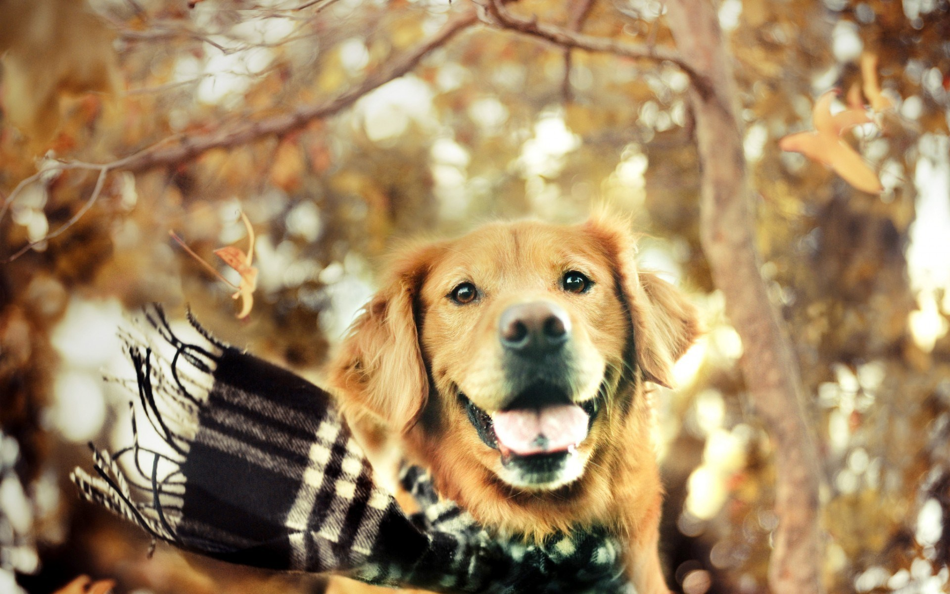 Dog Scarf Autumn Nature
