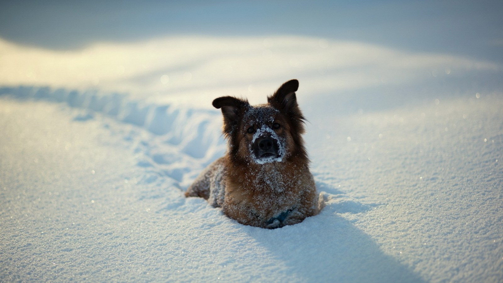 To set this Dog Snow Photography as wallpaper background on your Desktop, SmartPhone, Tablet, Laptop, iphone, ipad click above to open in a new window in ...