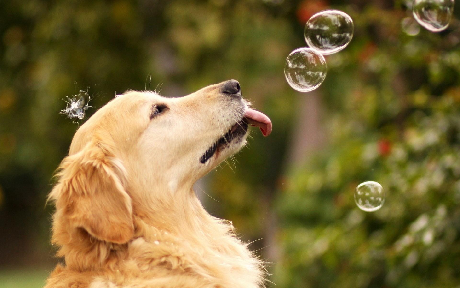 Dog Soap Bubbles Mood HD Wallpaper