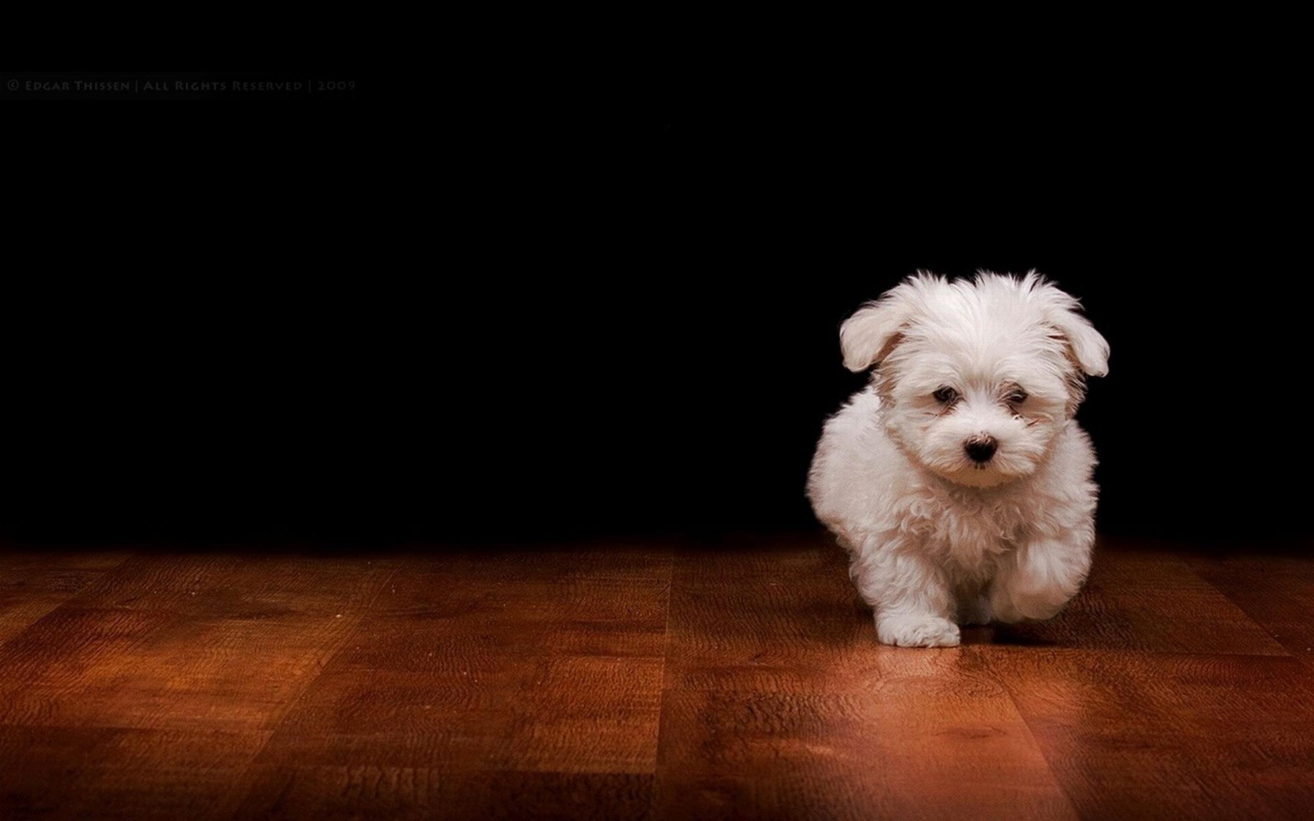 dog-wallpaper-01.jpg ...