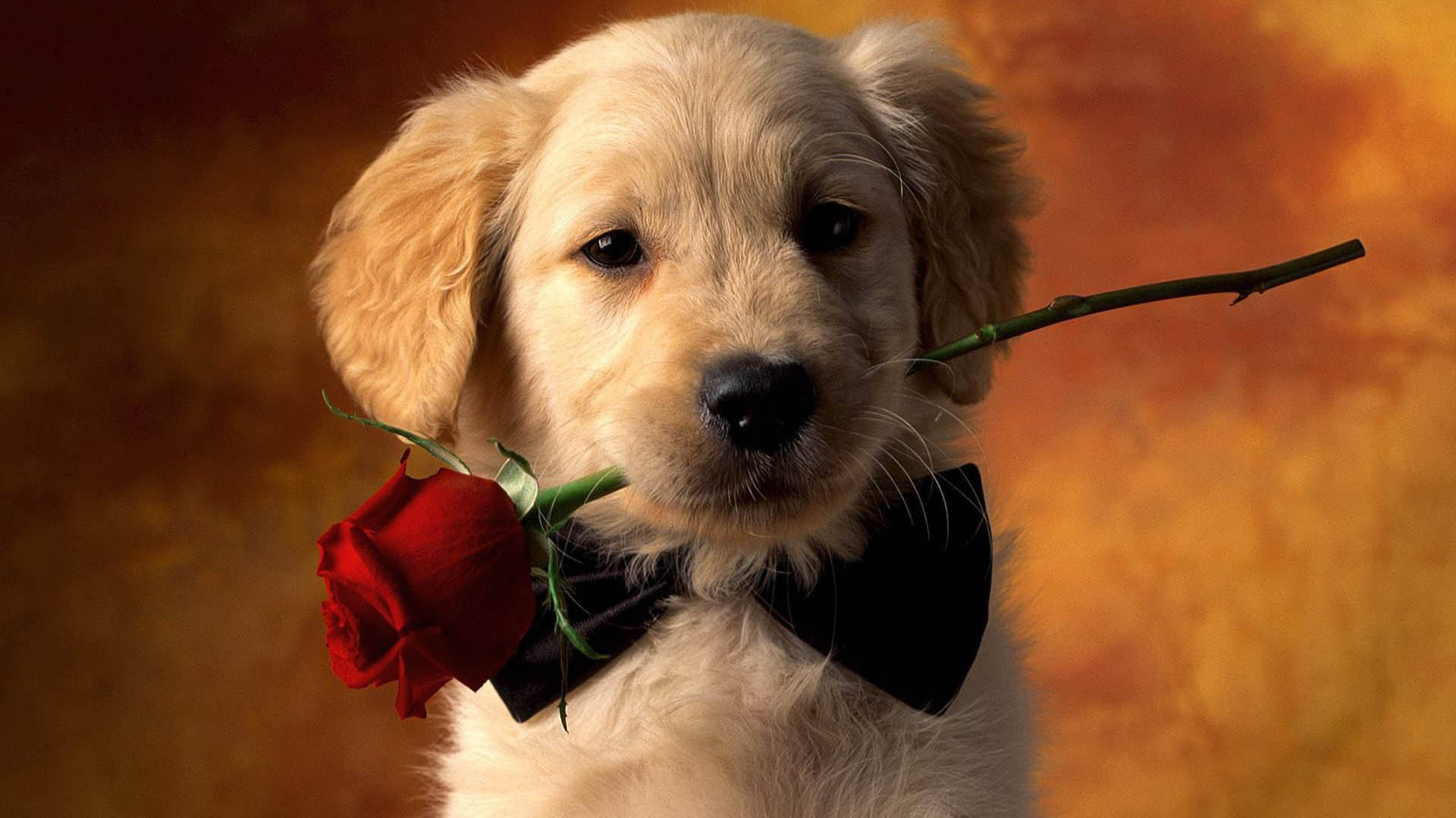 dog wallpapers flowers