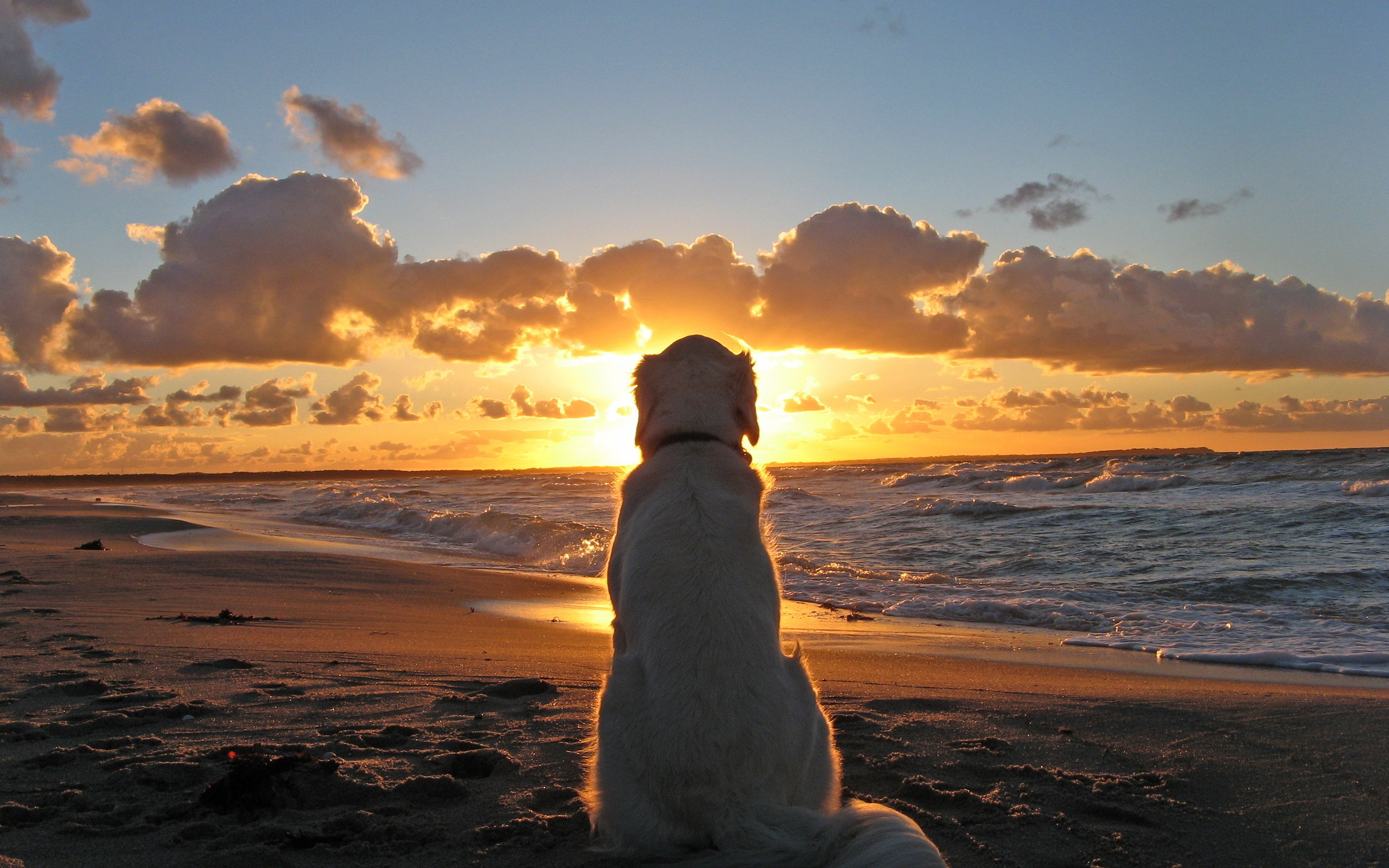 Dog watch Sunset