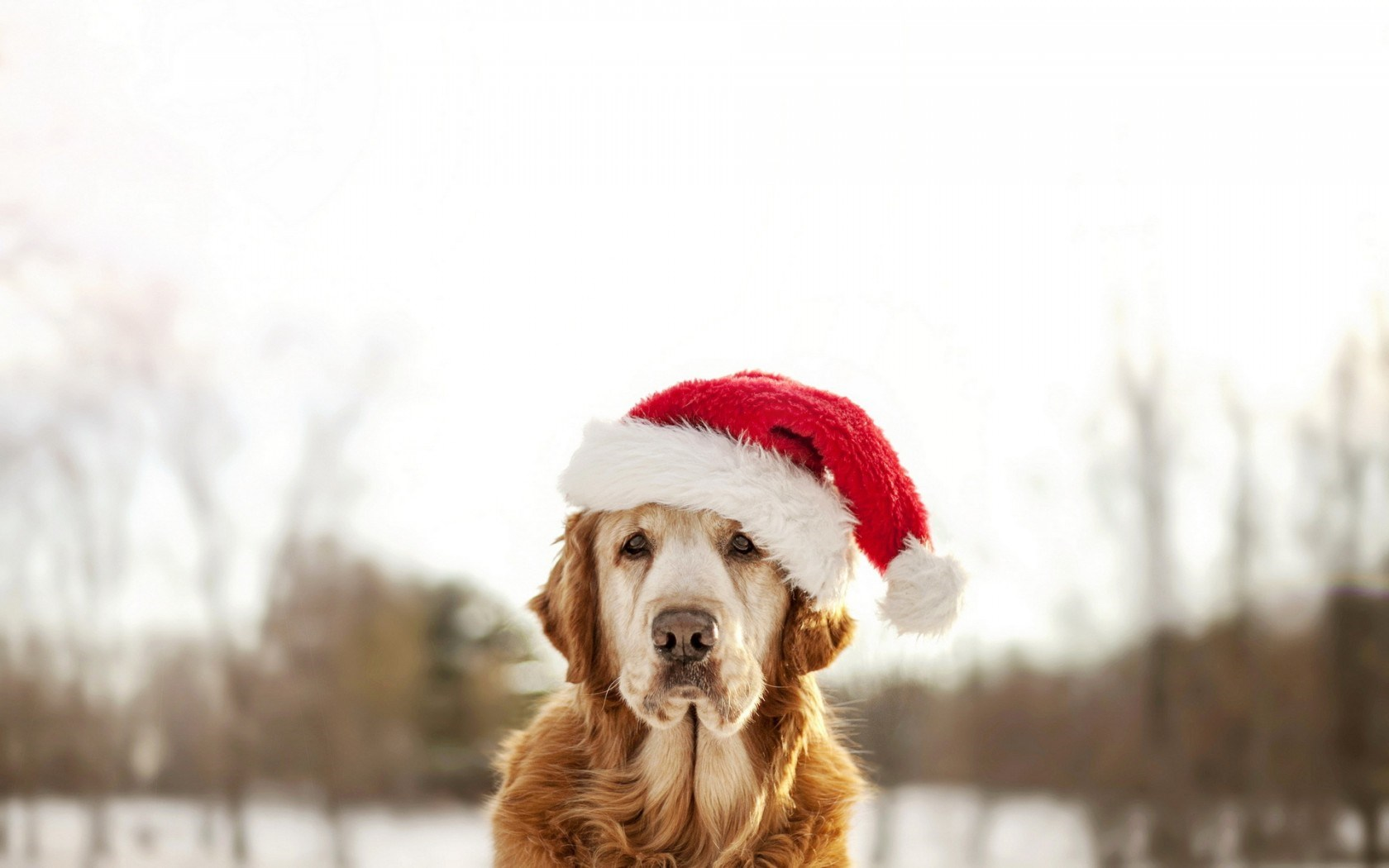 Dog Winter Christmas New Year