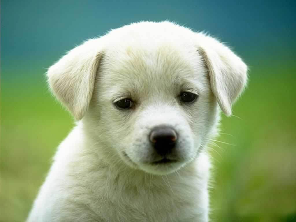 Dog- Photo#04