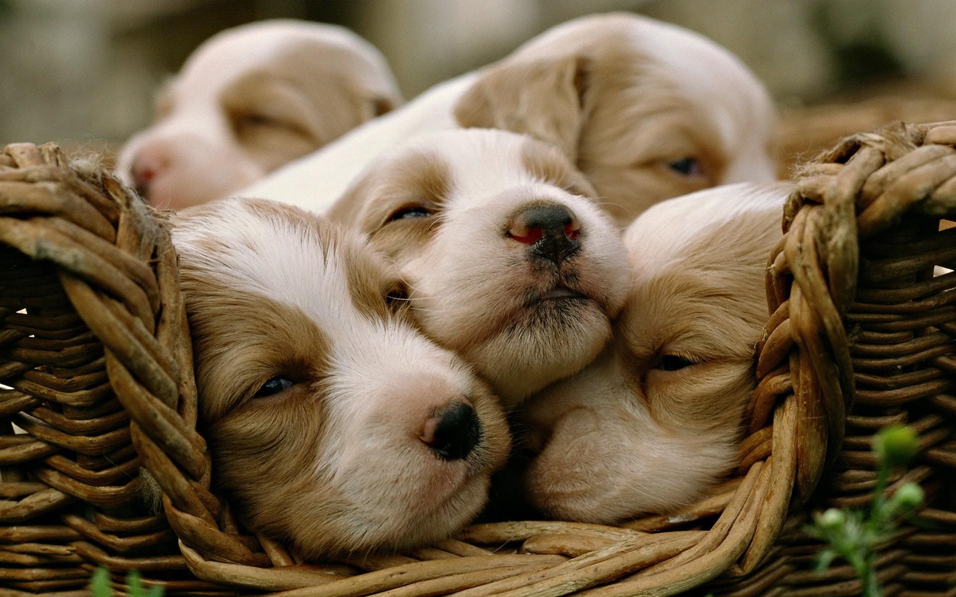 Dogs Wallpaper 1920x1200 36590
