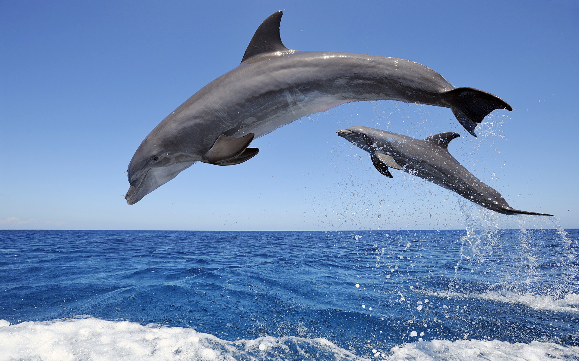 Bottlenose dolphins have excellent vision both above and below the water.