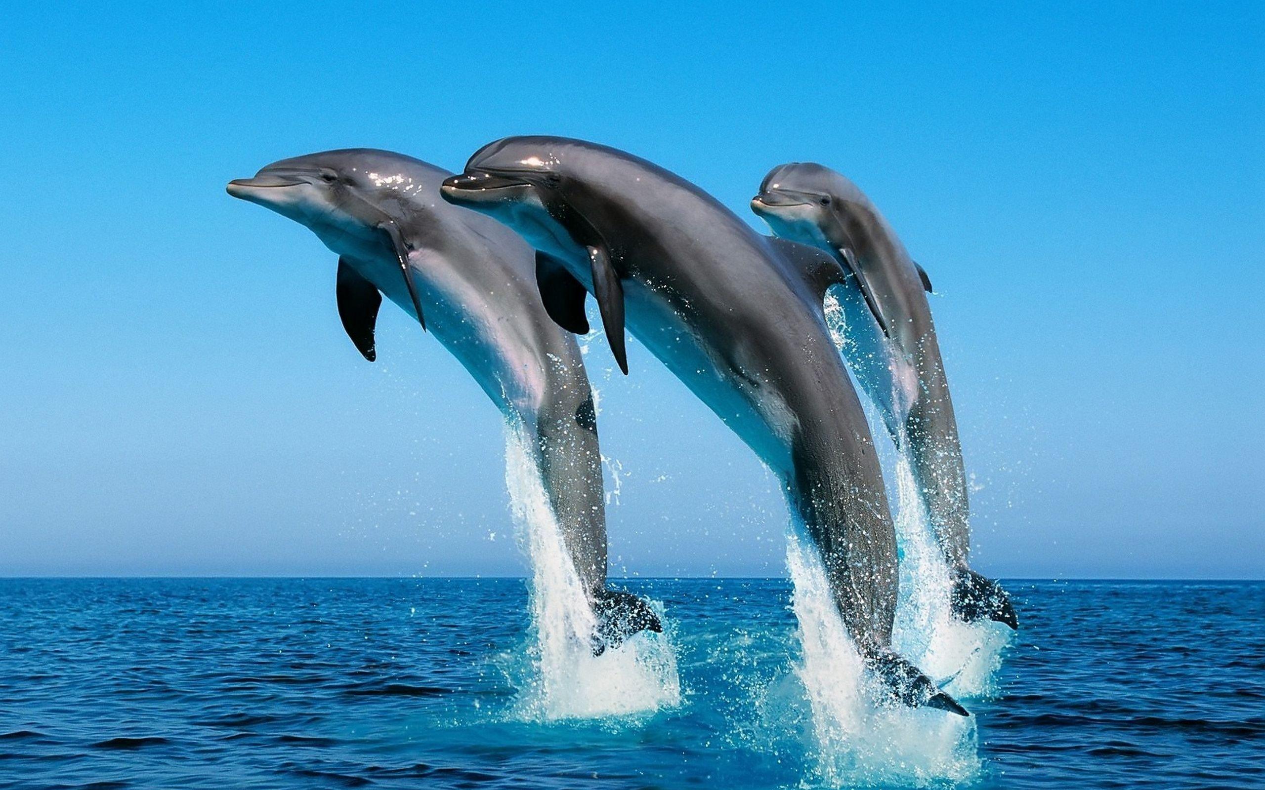 2560x1600 Animal Dolphin
