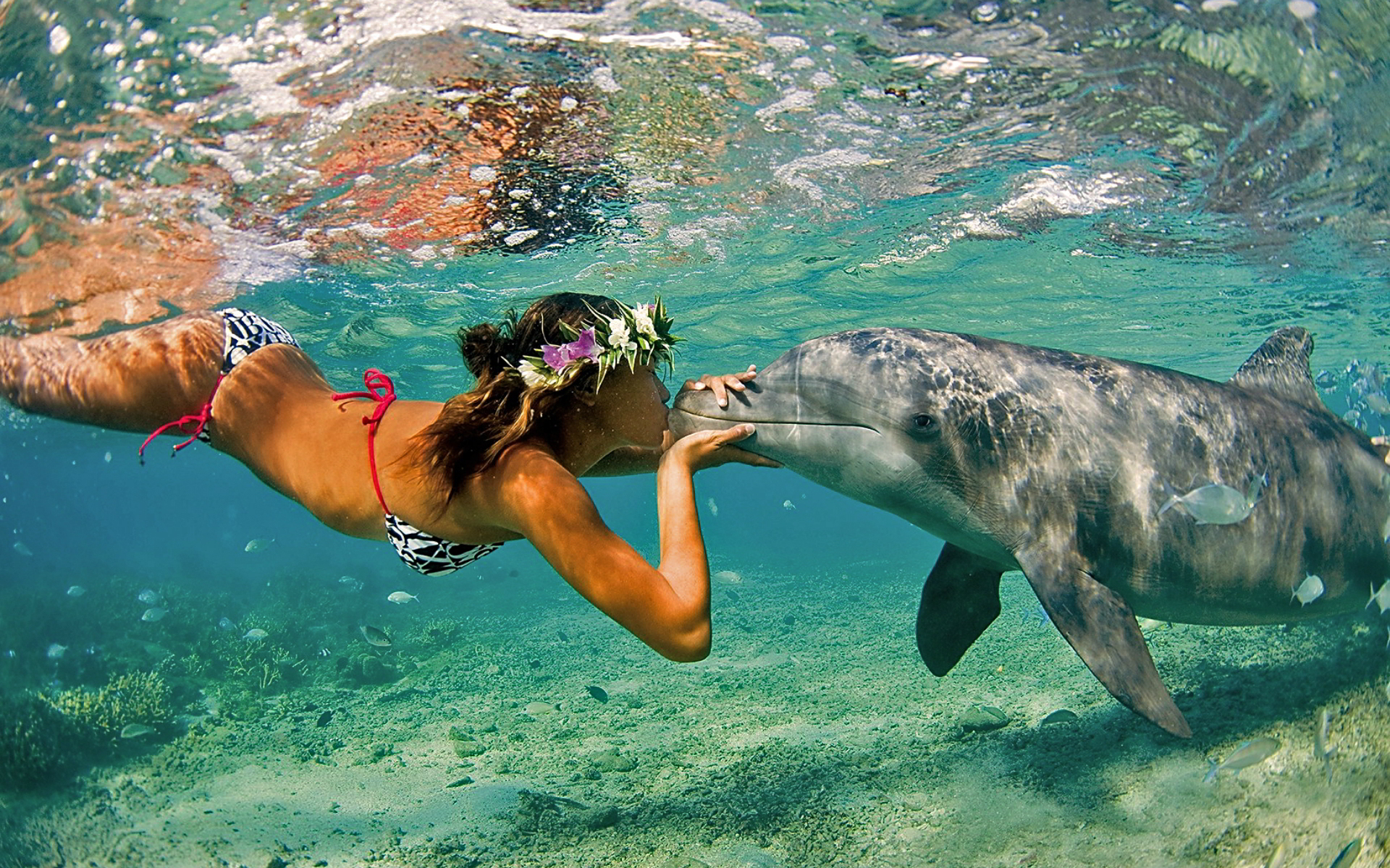 Dolphin girl kiss
