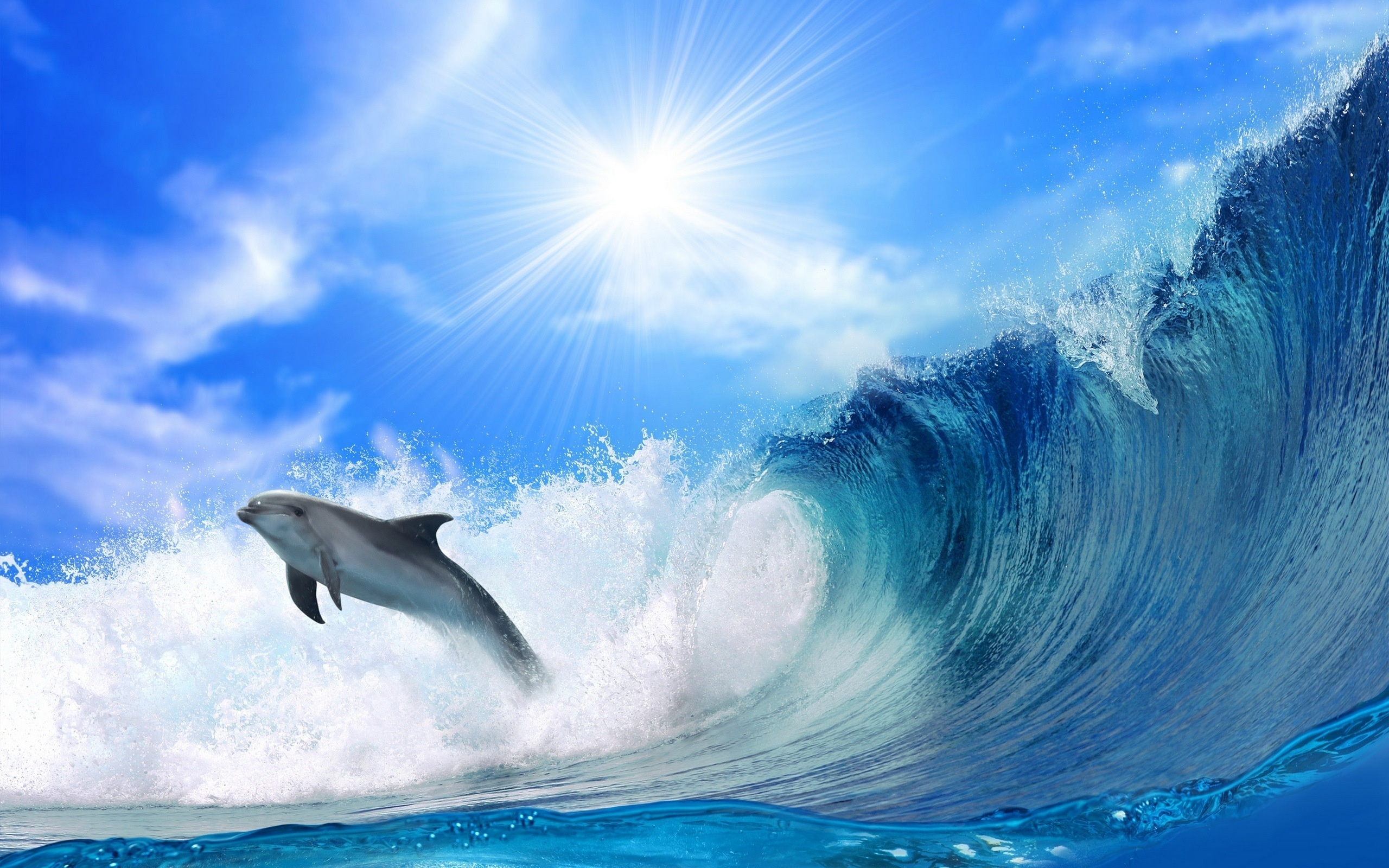 Dolphin in Wave Wallpaper