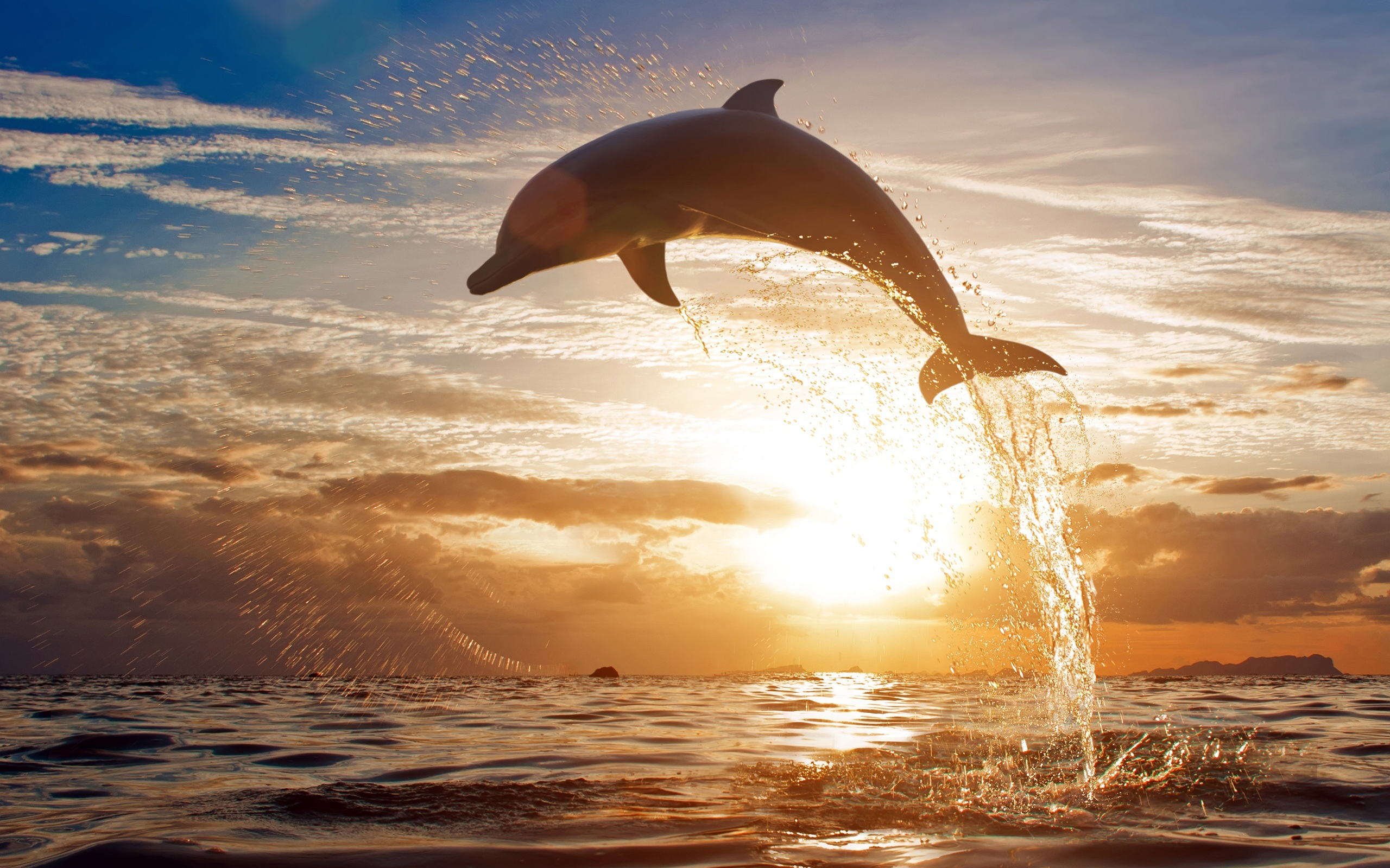 Dolphin Jump Sunset