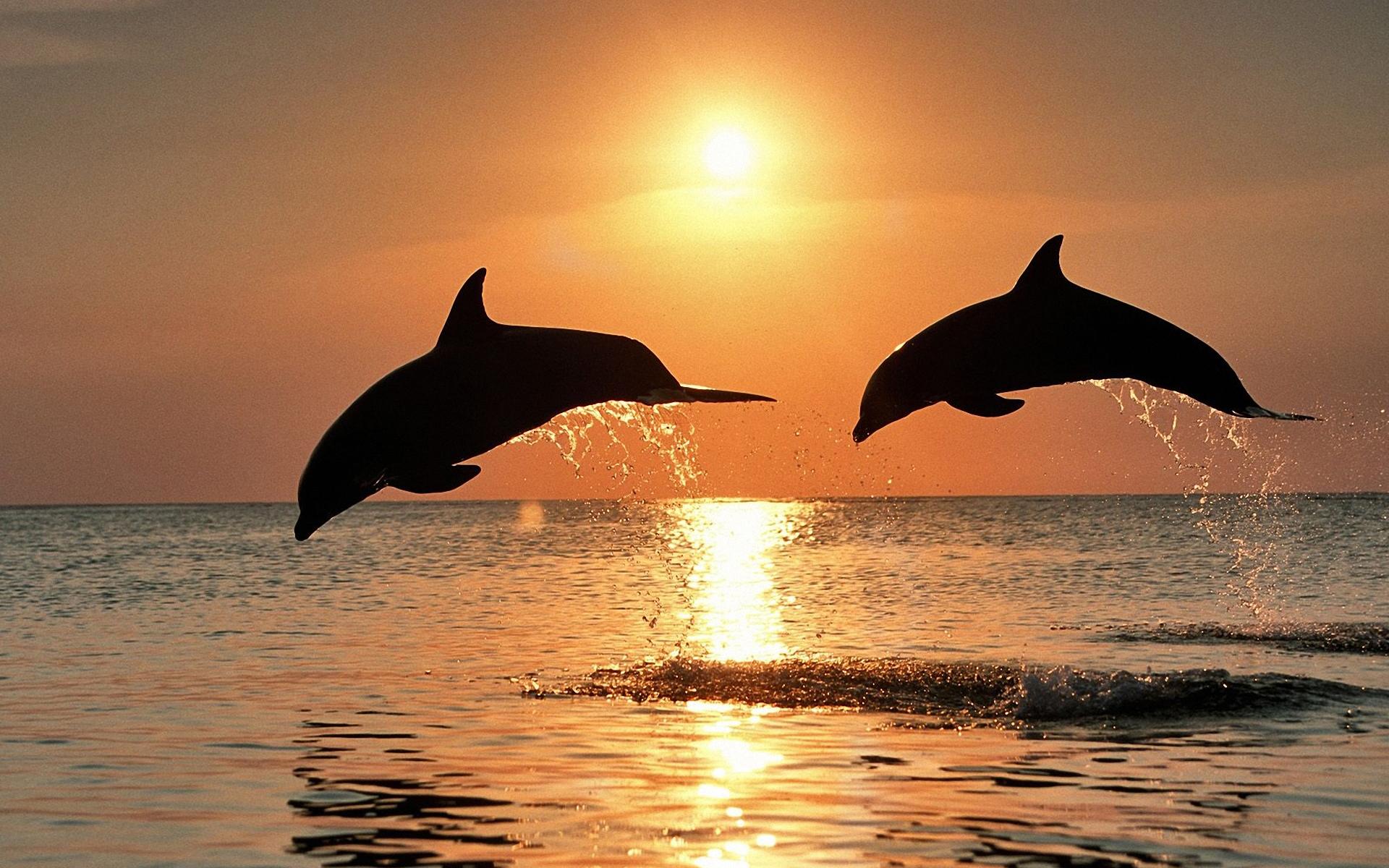 HD Wallpaper | Background ID:415256. 1920x1200 Animal Dolphin