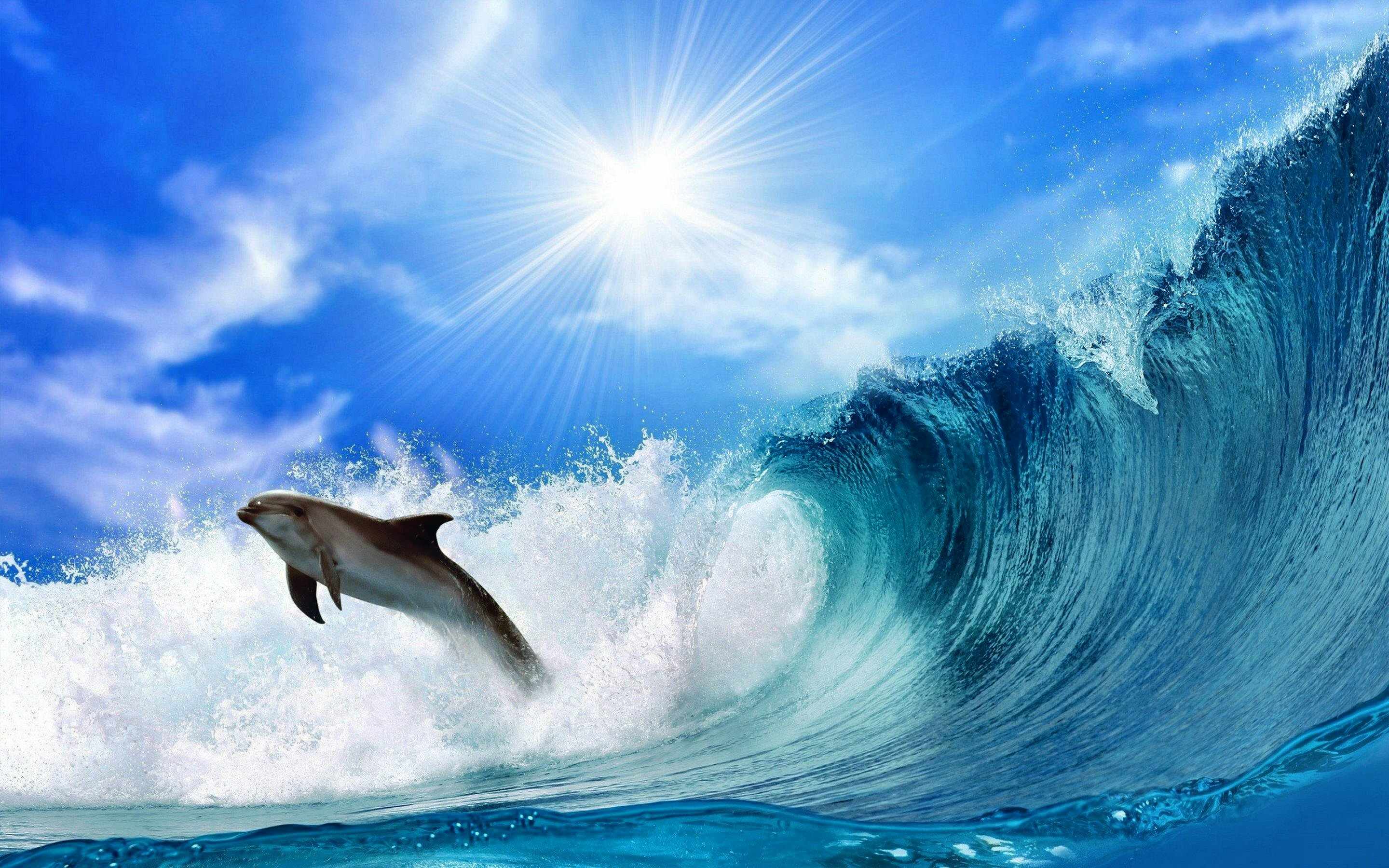 HD Wallpaper | Background ID:328209. 2880x1800 Animal Dolphin