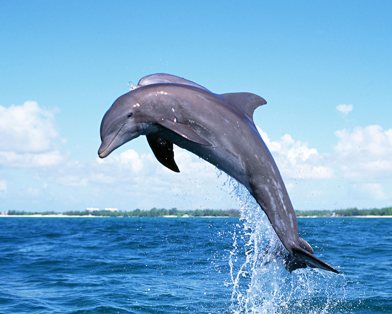 Dolphins Wallpaper - HD Wallpapers