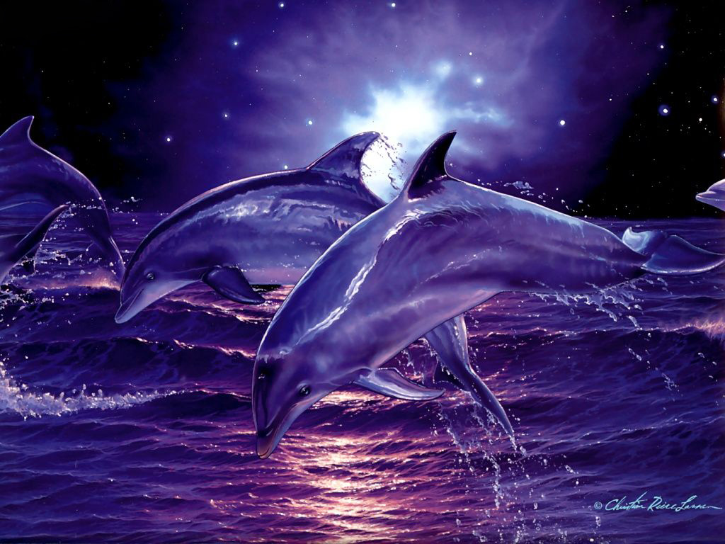 Image for Free Dolphins Wallpaper