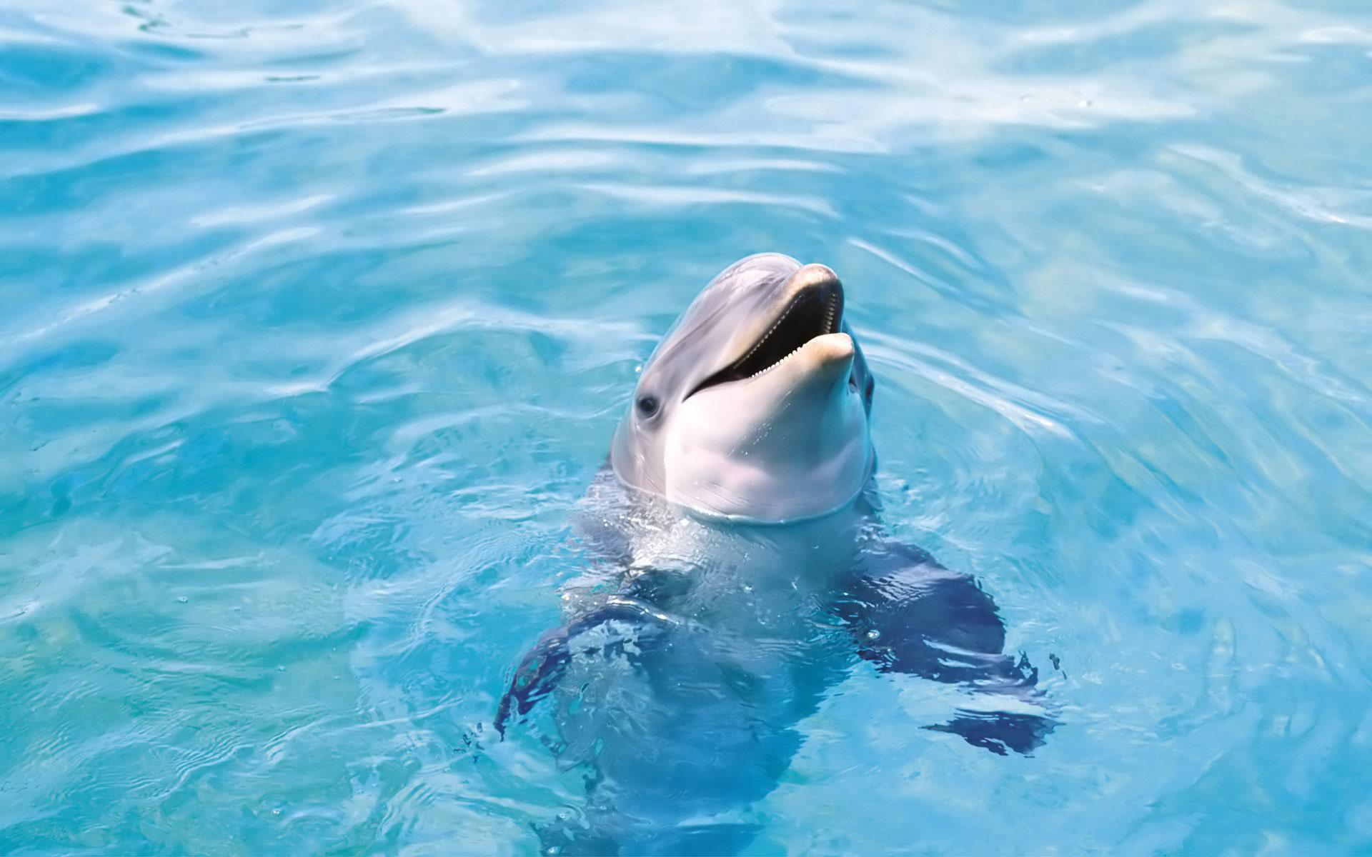 HD Wallpaper | Background ID:451290. 1920x1200 Animal Dolphin