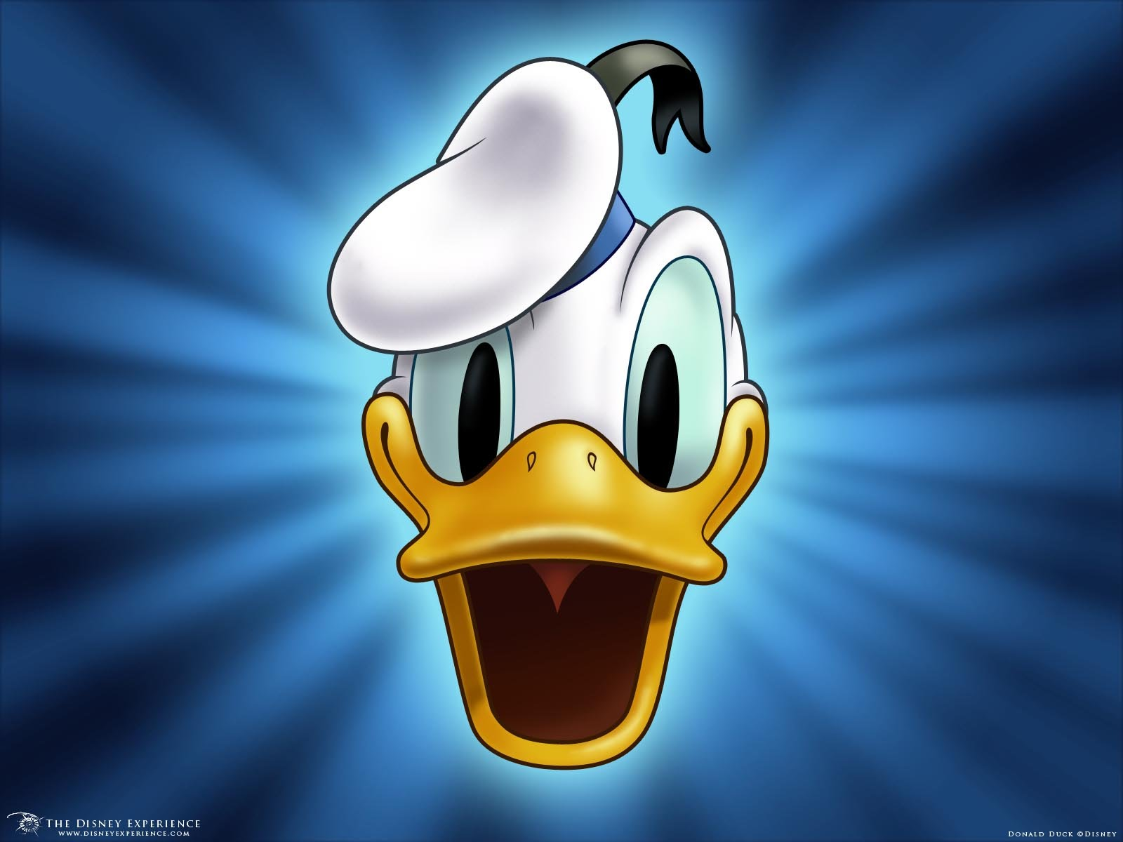 Donald Duck Cartoon