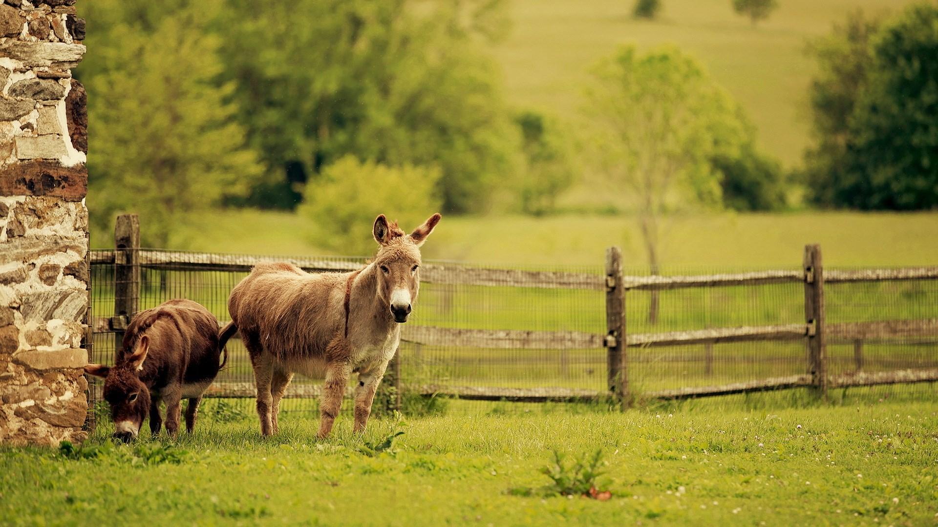Donkeys Summer Nature