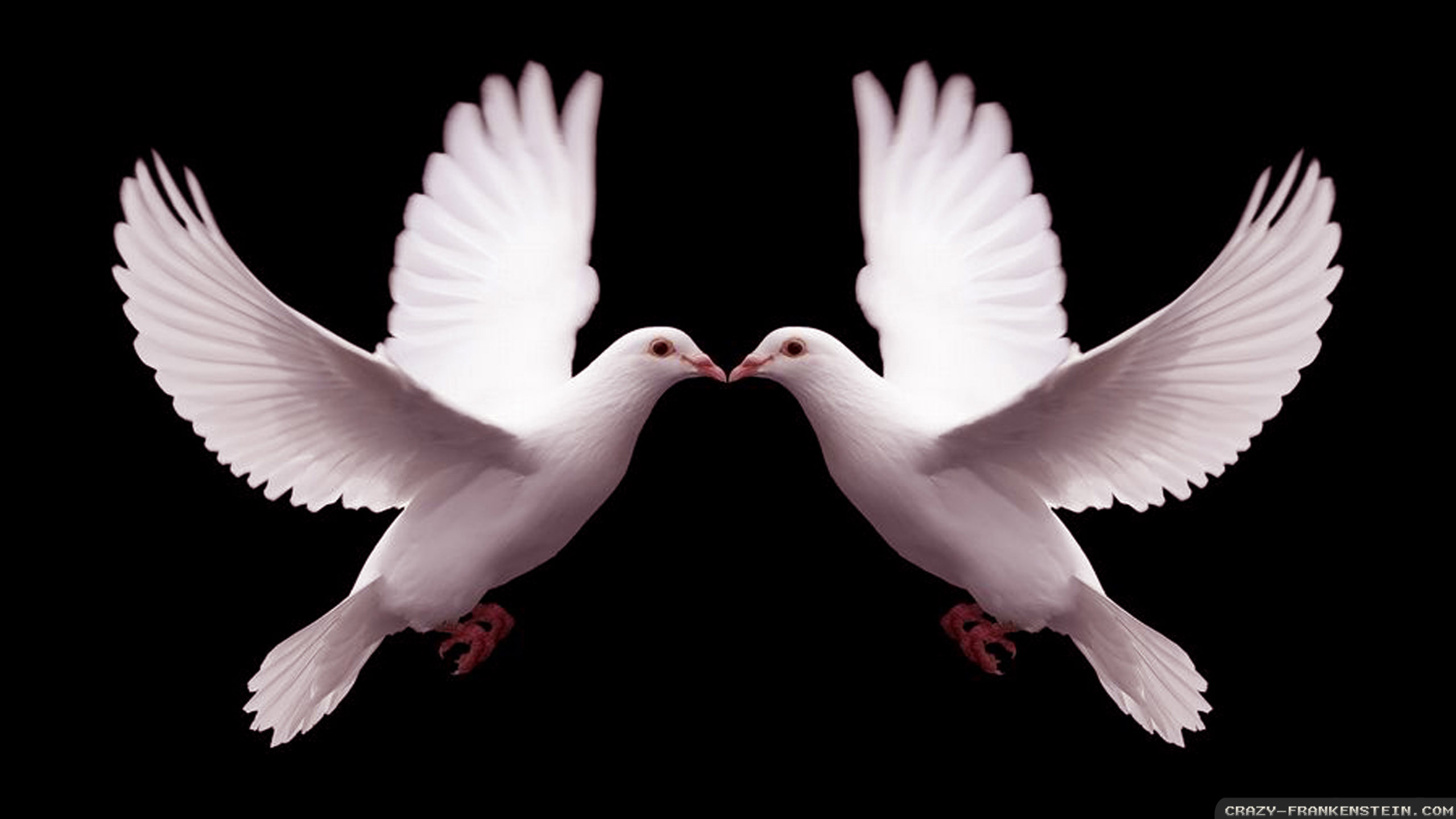 Dove Wallpapers 3797
