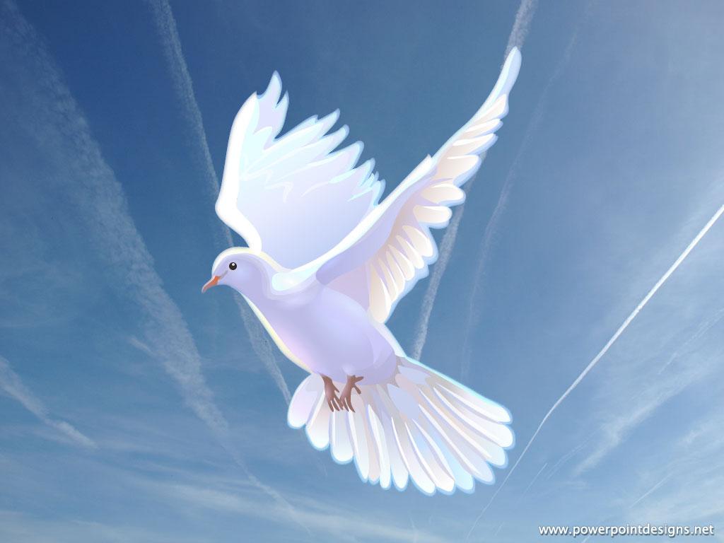 Dove - doves Wallpaper