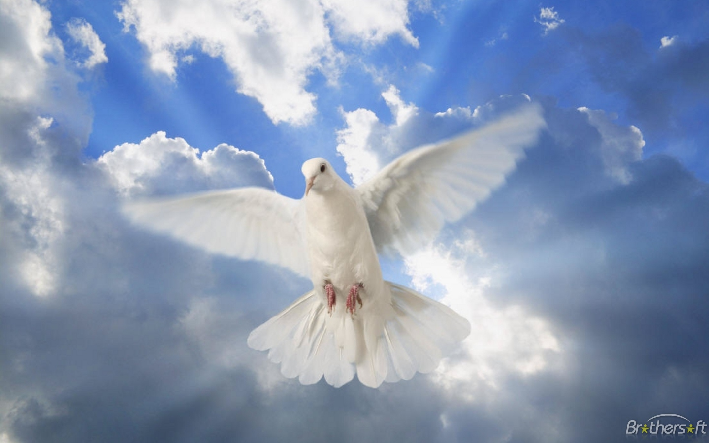 Dove of Peace Wallpaper #245300 - Resolution 1440x900 px