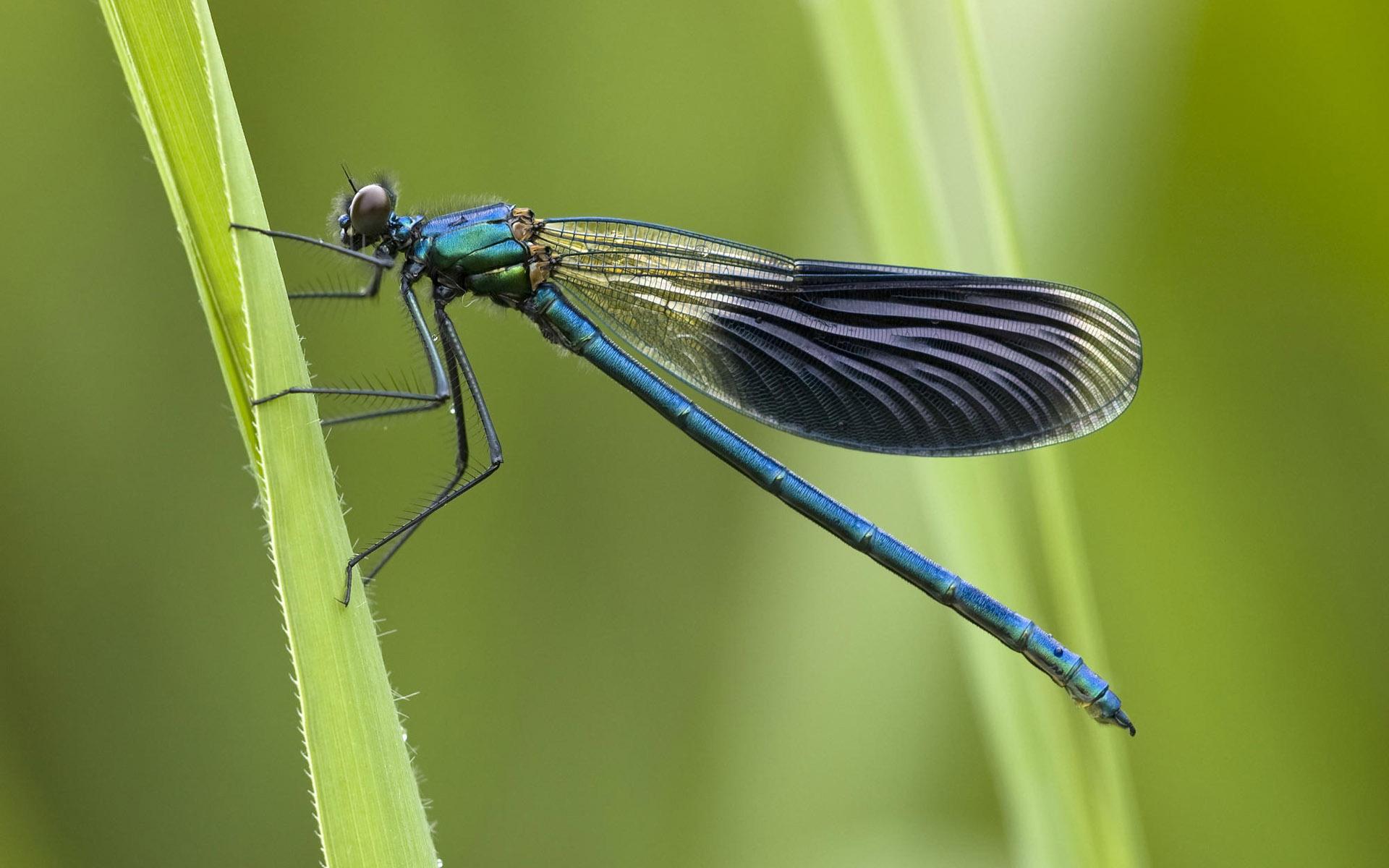 ... Dragonfly Wallpaper; Dragonfly Wallpaper