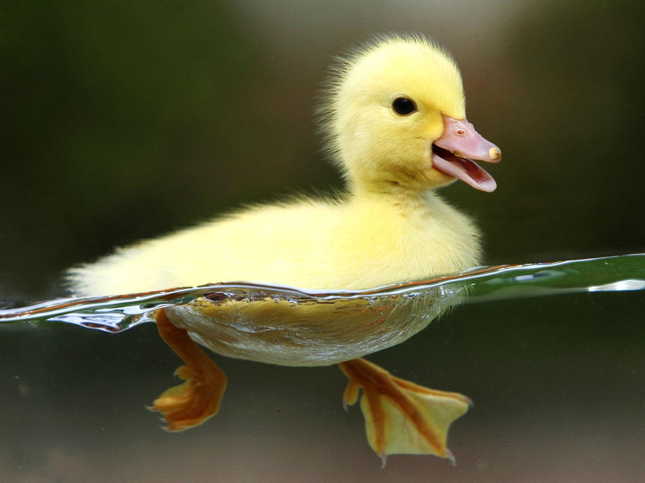 baby paddling