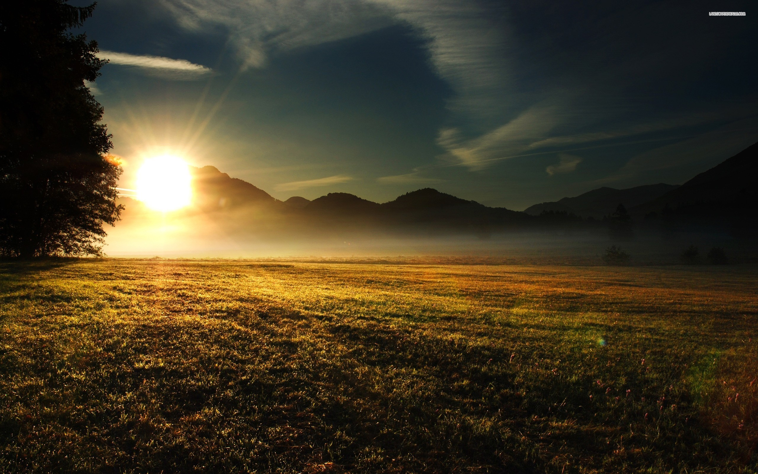Grass Field at Dusk wallpaper 2560x1600 Original ...