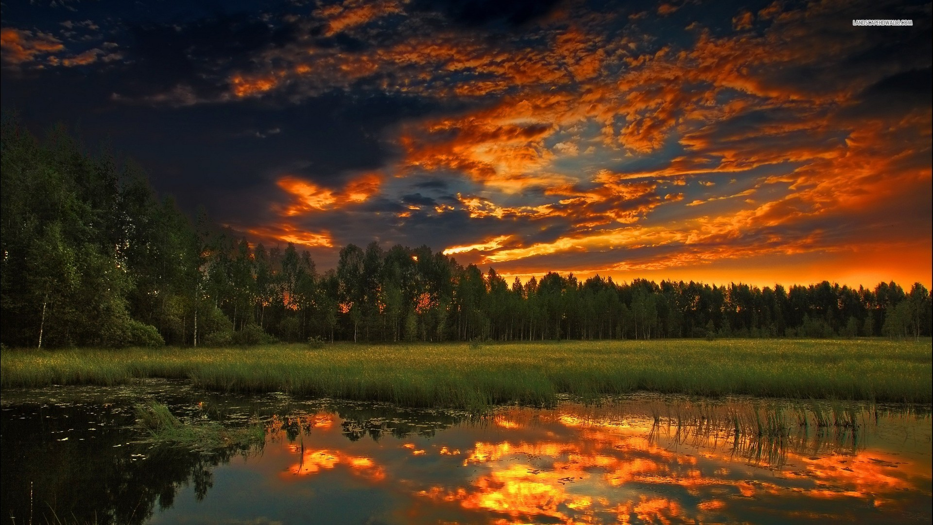 ... Forest Pond at Dusk wallpaper 1920x1080 1080p ...