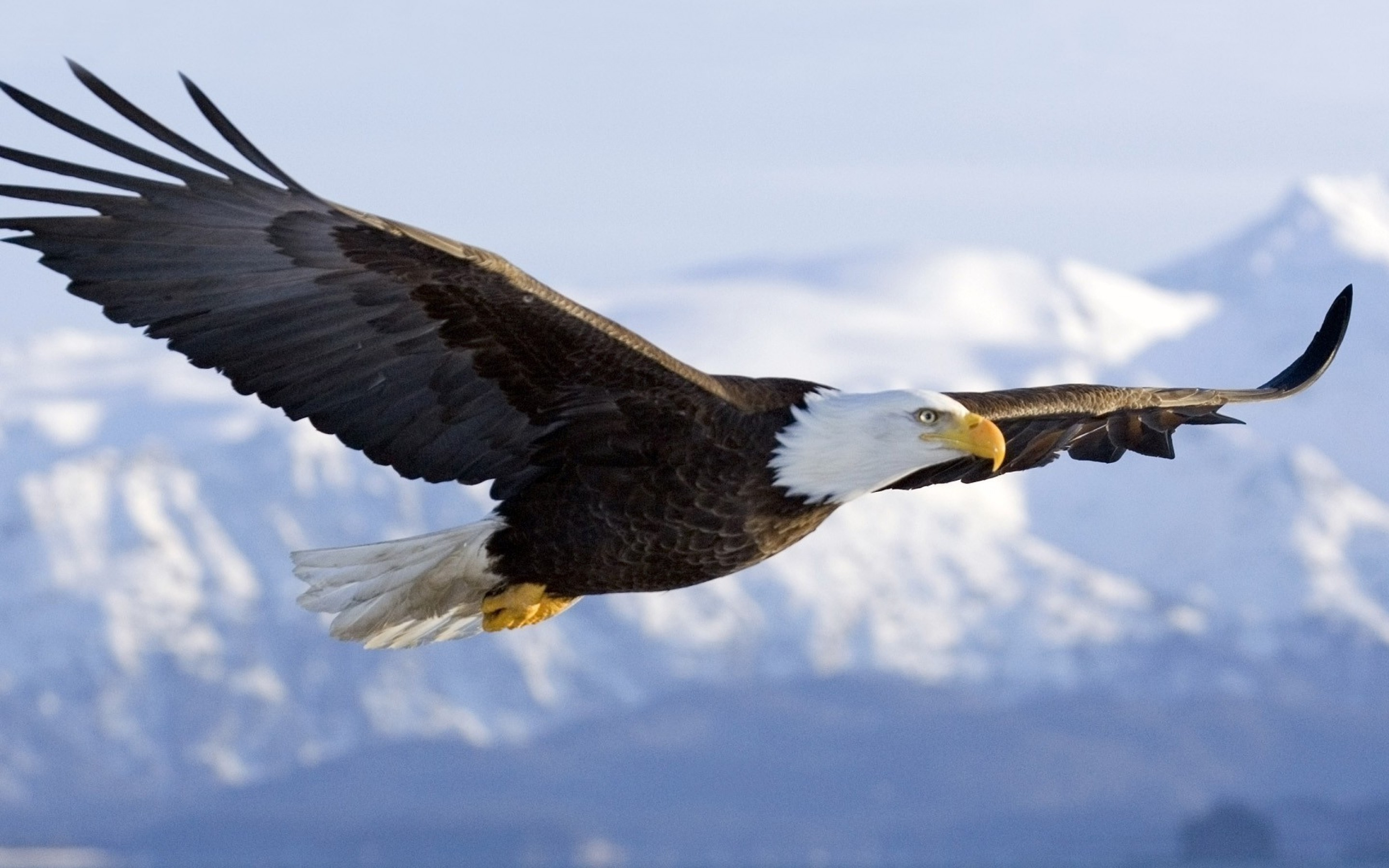 7 Highly Effective Habits of Eagles